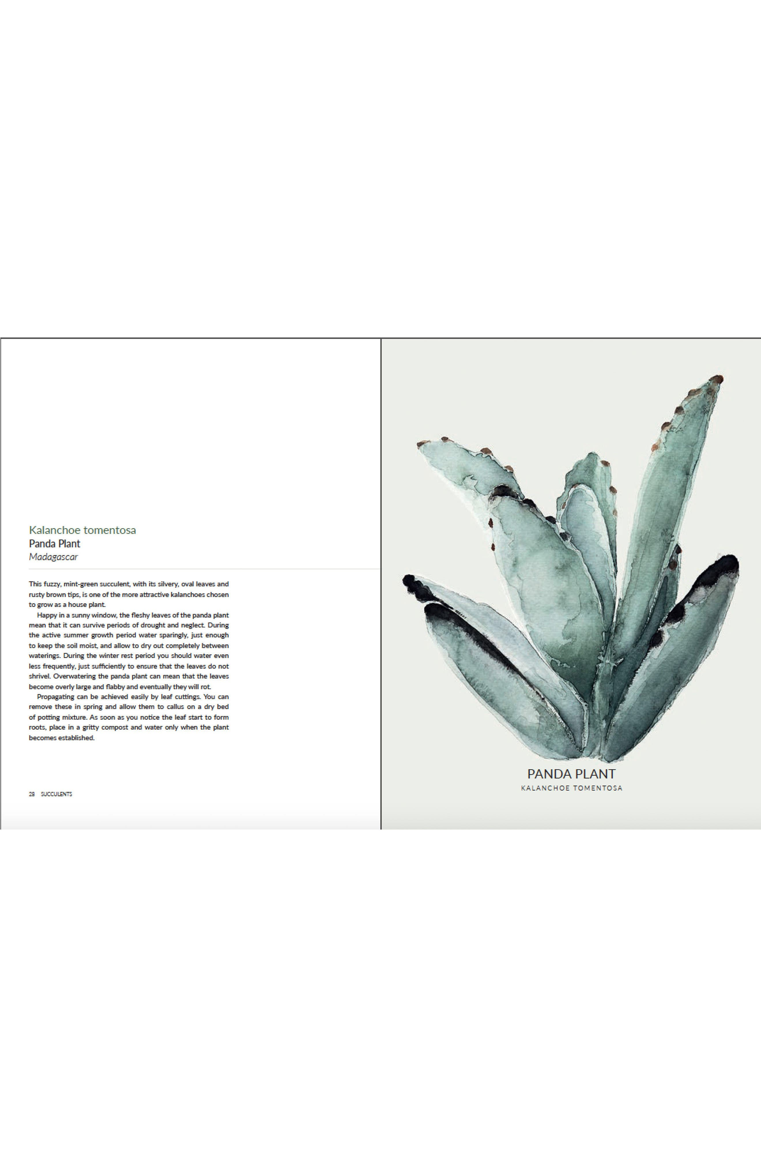 Urban Botanics Book,                             Alternate thumbnail 2, color,                             300