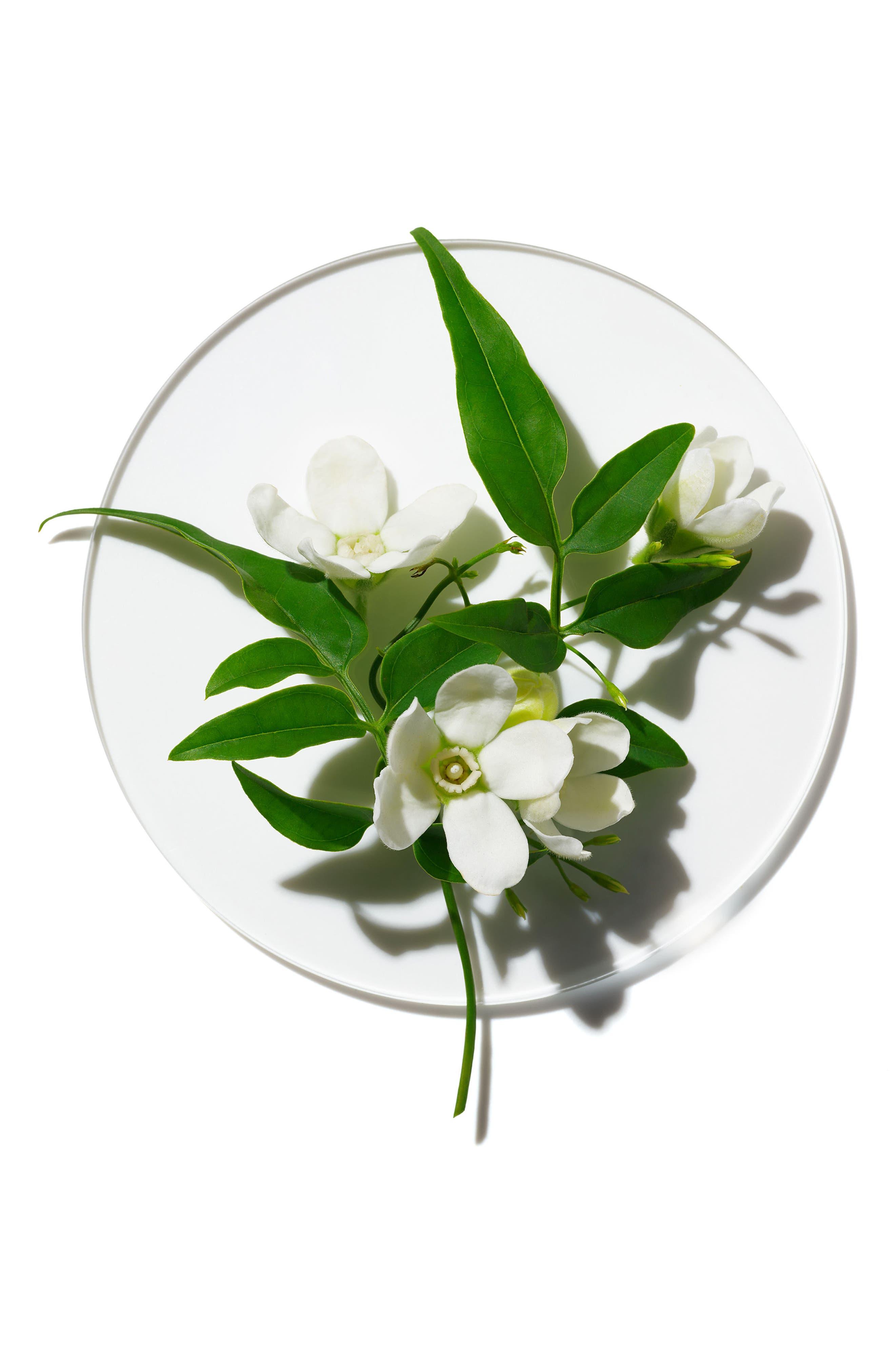 My Happy Peace and Jasmine Fragrance,                             Alternate thumbnail 3, color,                             000