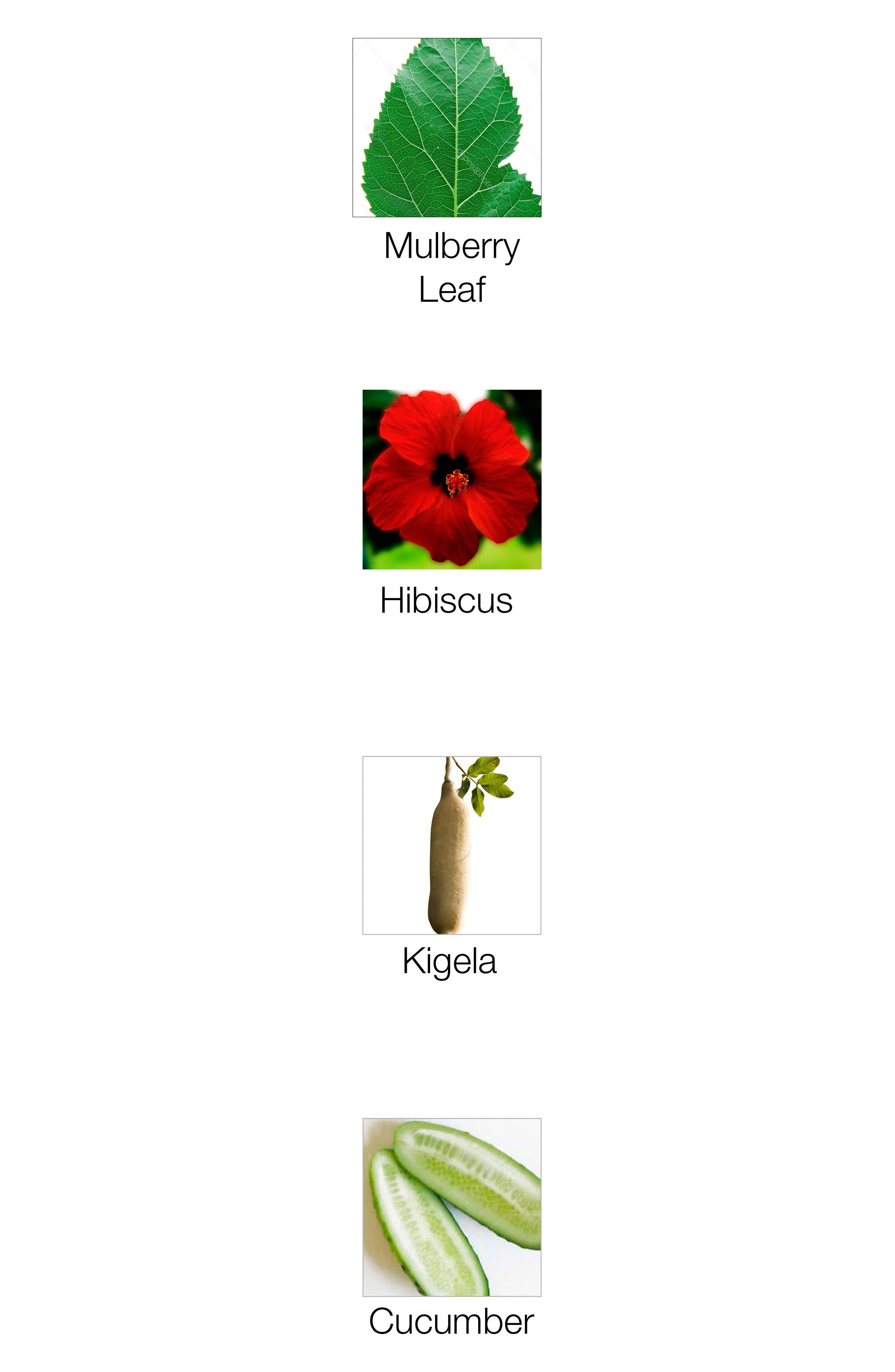 THE ORGANIC PHARMACY,                             Rose Plus Age Renewal Face Cream,                             Alternate thumbnail 2, color,                             000