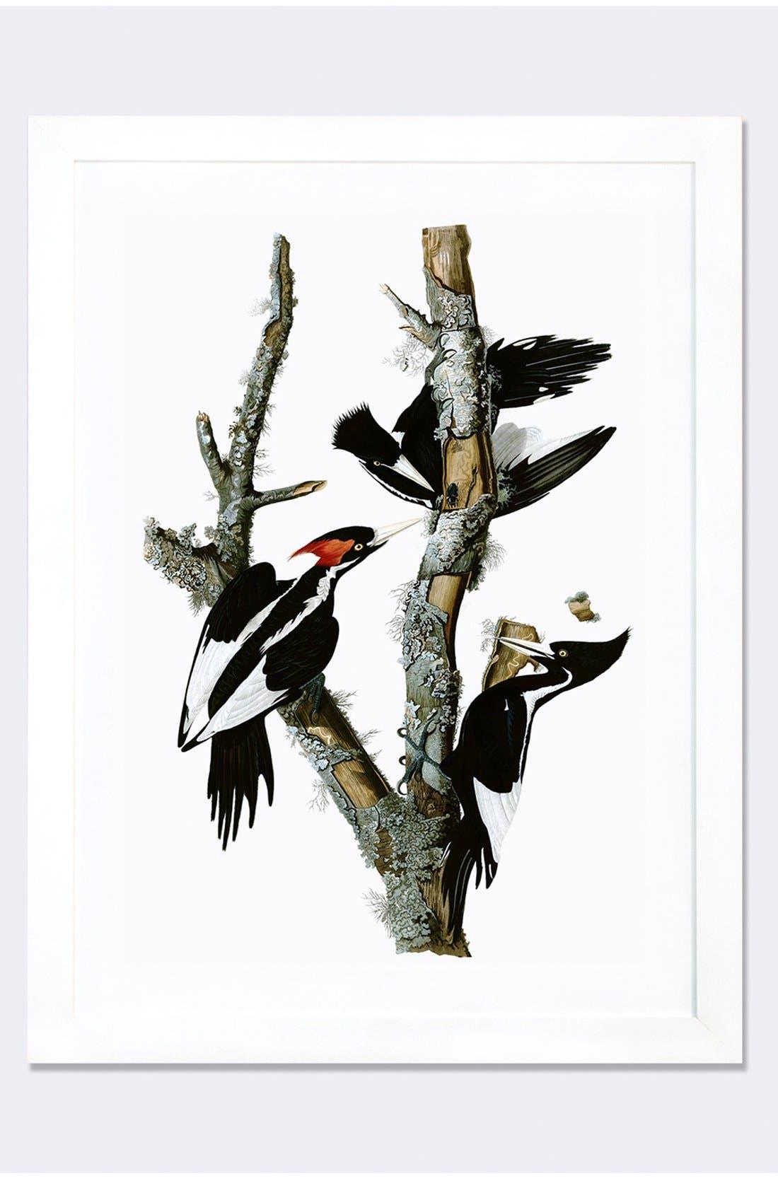 'Ivory Billed Woodpecker' Framed Fine Art Print,                             Main thumbnail 1, color,                             WHITE