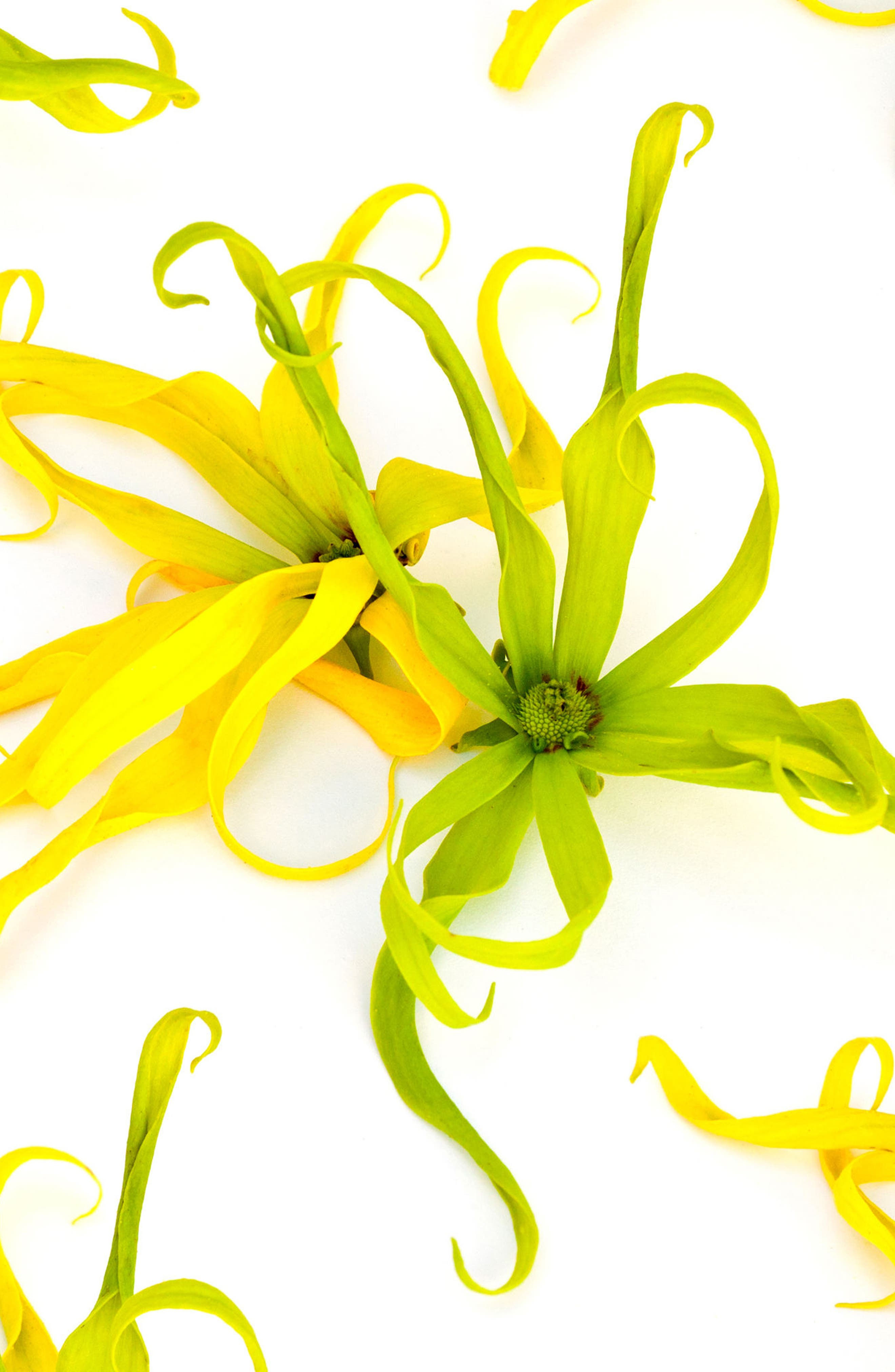 Jasmine Ylang Ylang Nutrient Oil,                             Alternate thumbnail 2, color,                             000