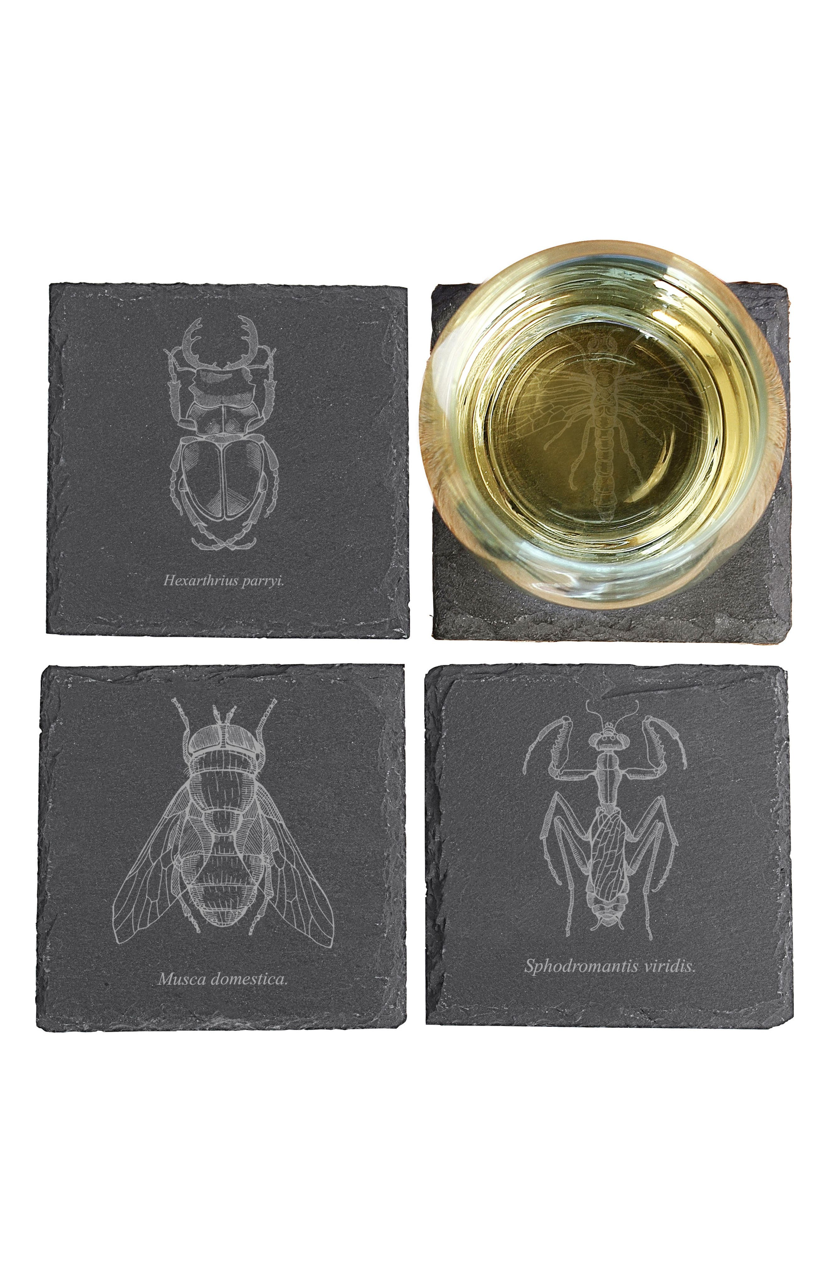 Set of 4 Insect Slate Coasters,                             Alternate thumbnail 2, color,                             BLACK