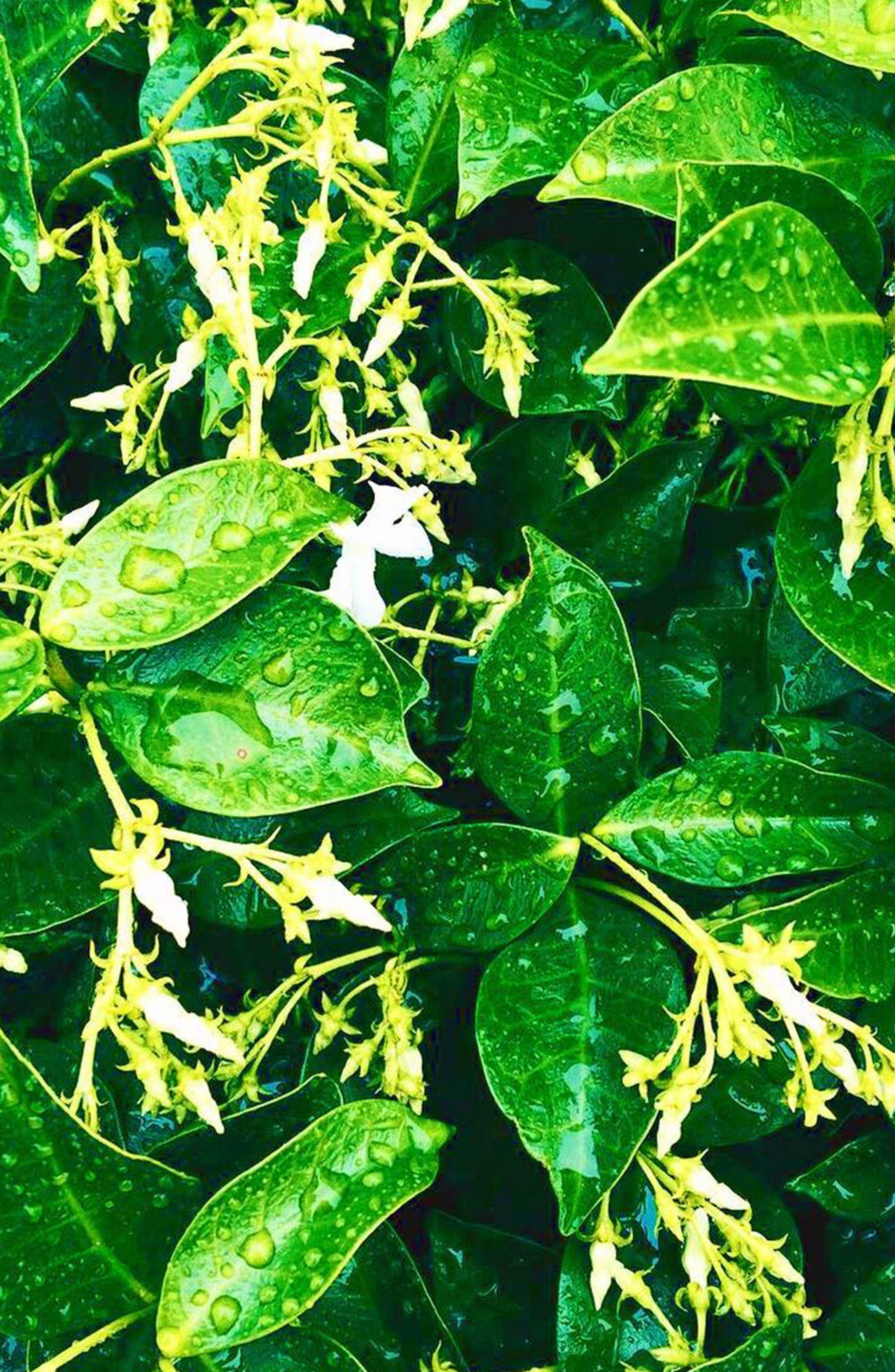 Jasmine Ylang Ylang Nutrient Oil,                             Alternate thumbnail 3, color,                             000