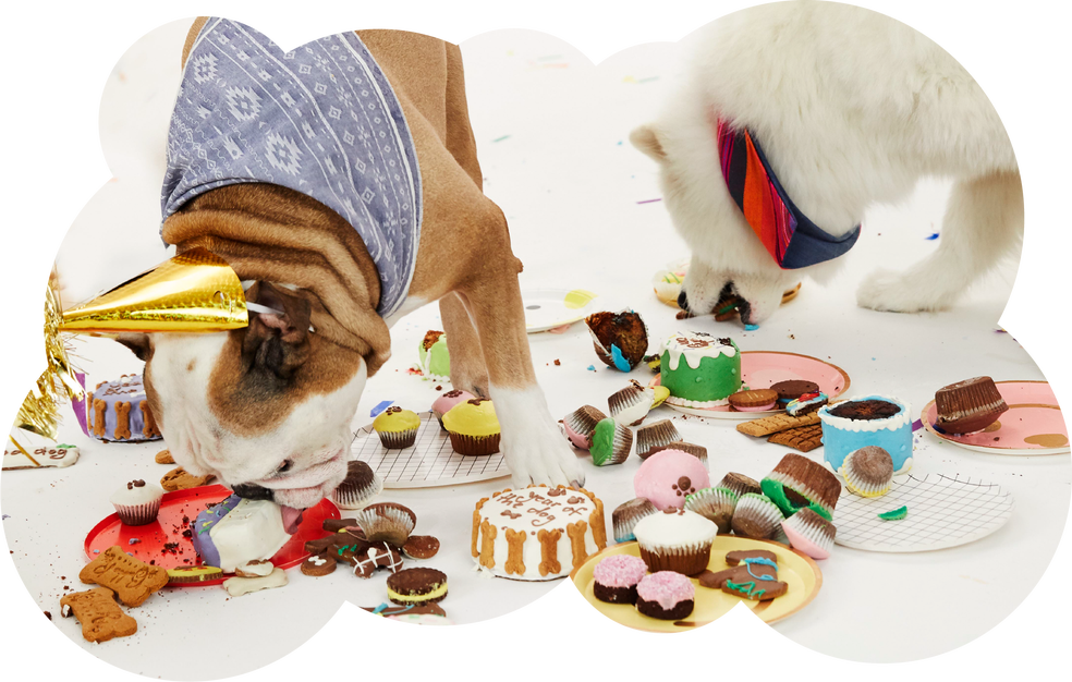 Pop-In@Nordstrom celebrates Year of the Dog.