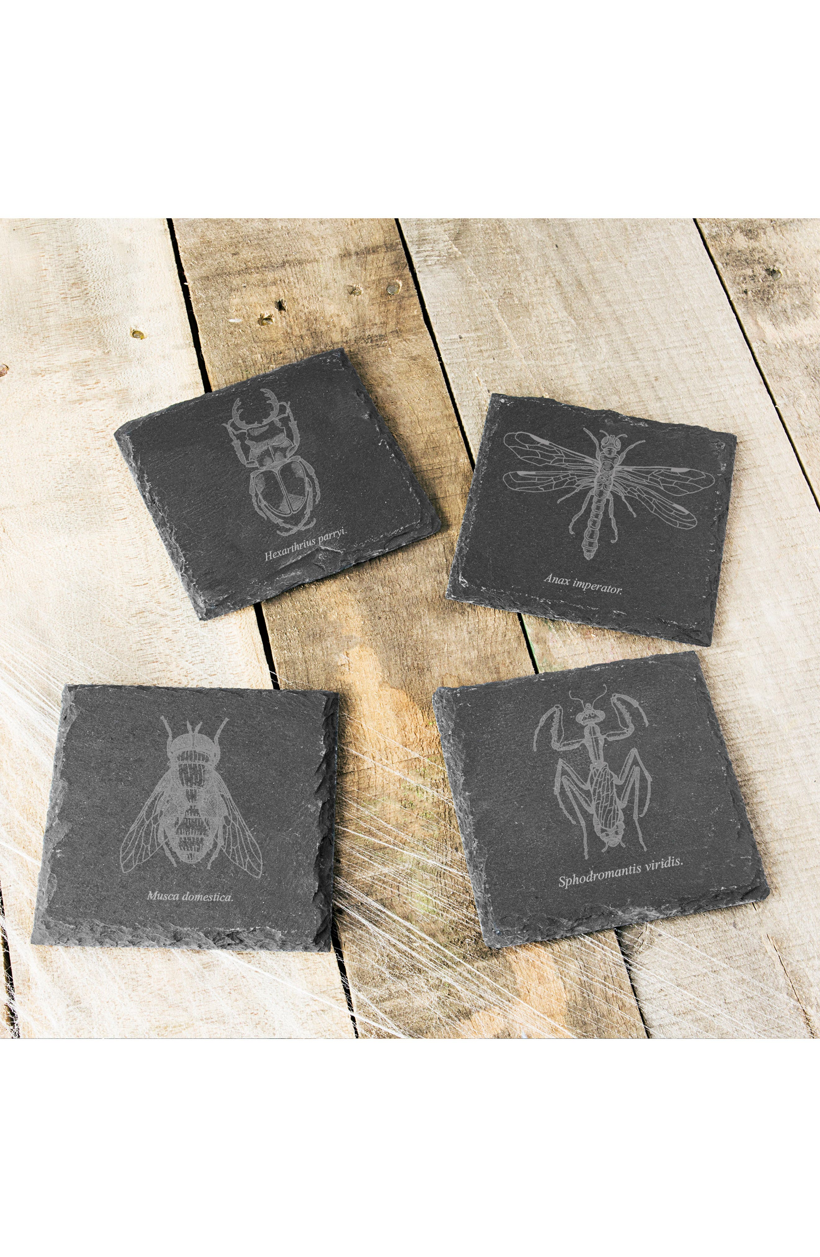 Set of 4 Insect Slate Coasters,                             Alternate thumbnail 3, color,                             BLACK