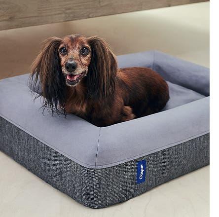 A dog in a Casper dog bed.