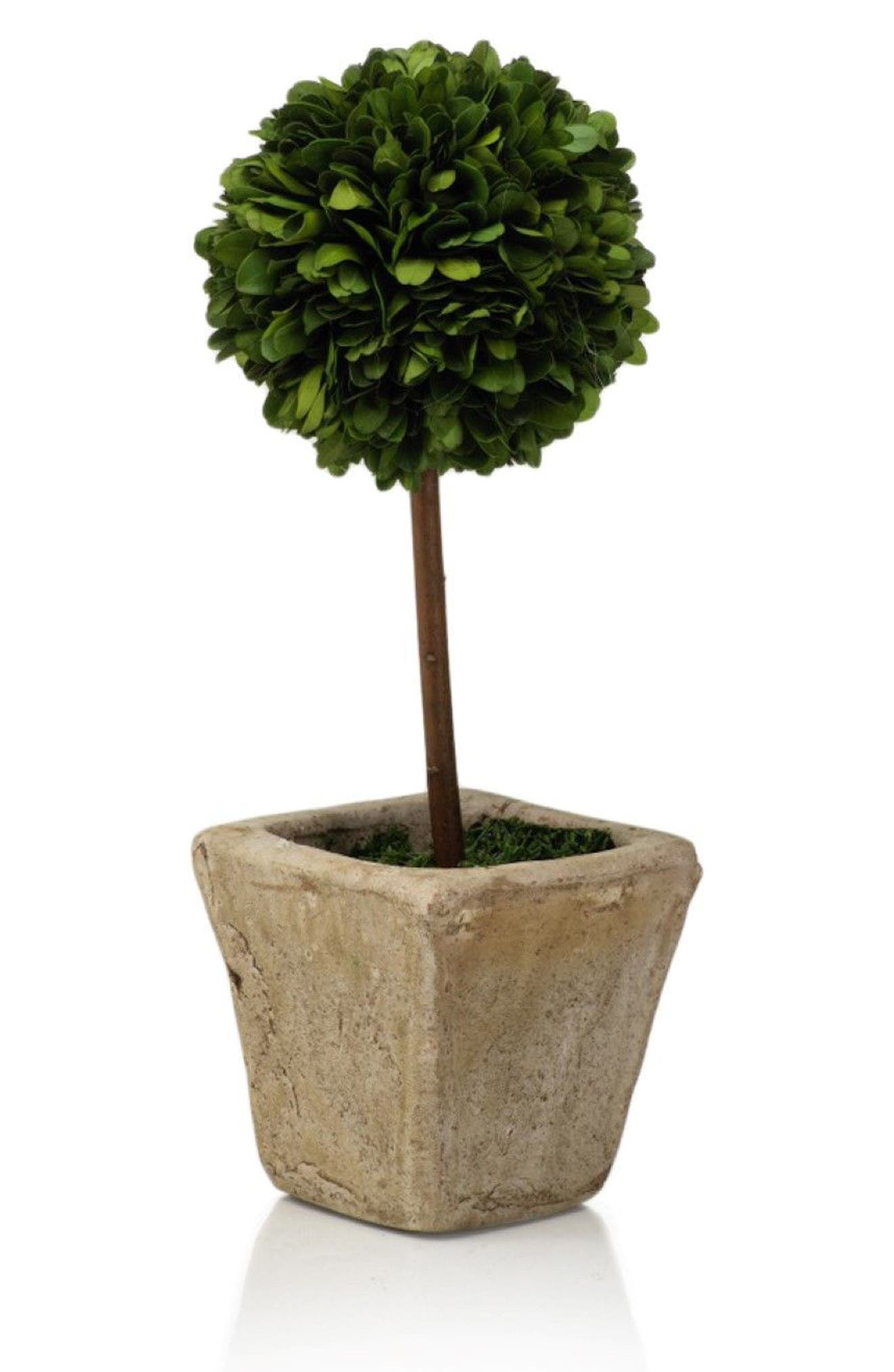 Boxwood Topiary Decoration,                         Main,                         color, 300