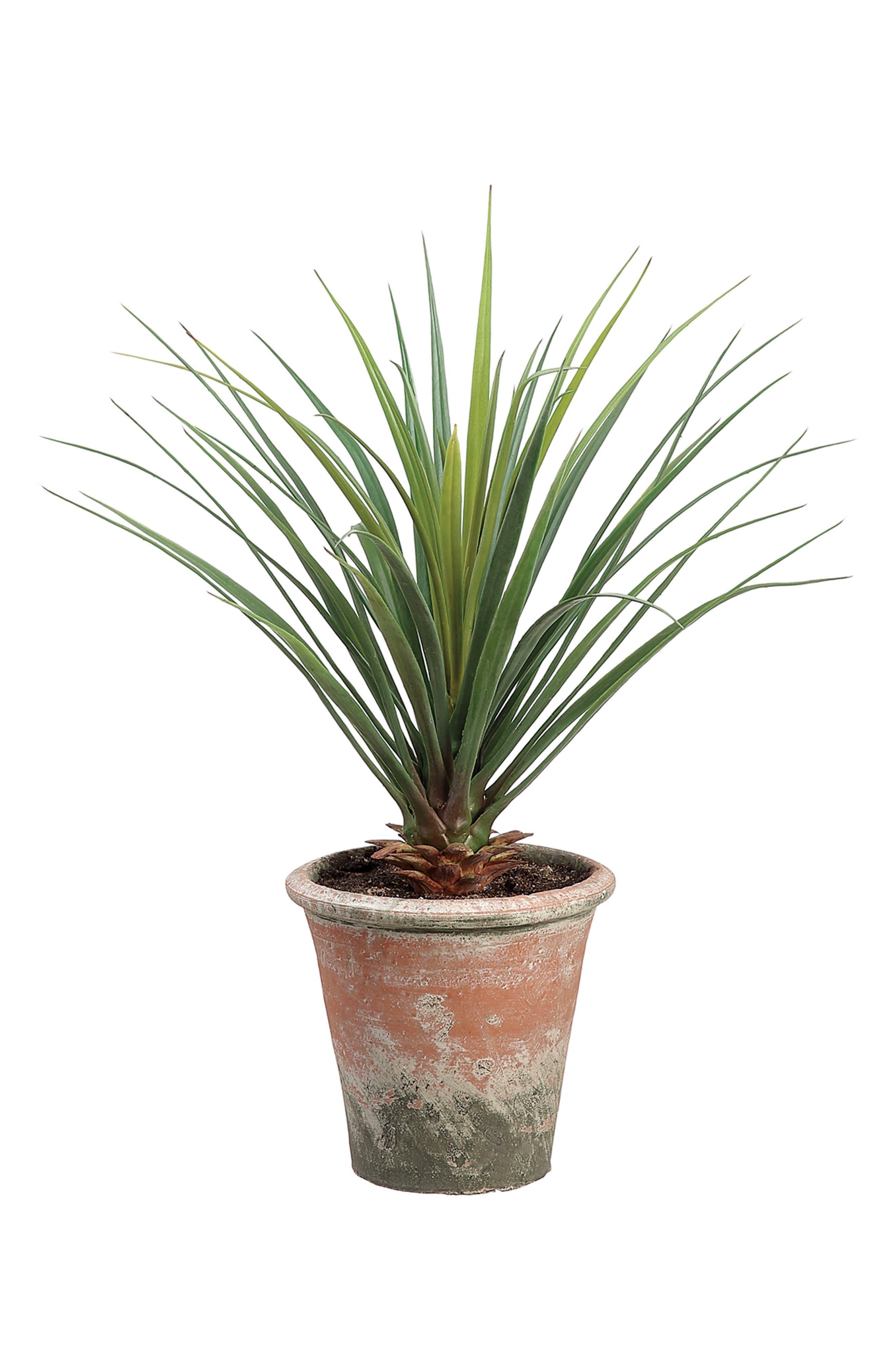 Yucca Plant Decoration,                             Main thumbnail 1, color,                             300