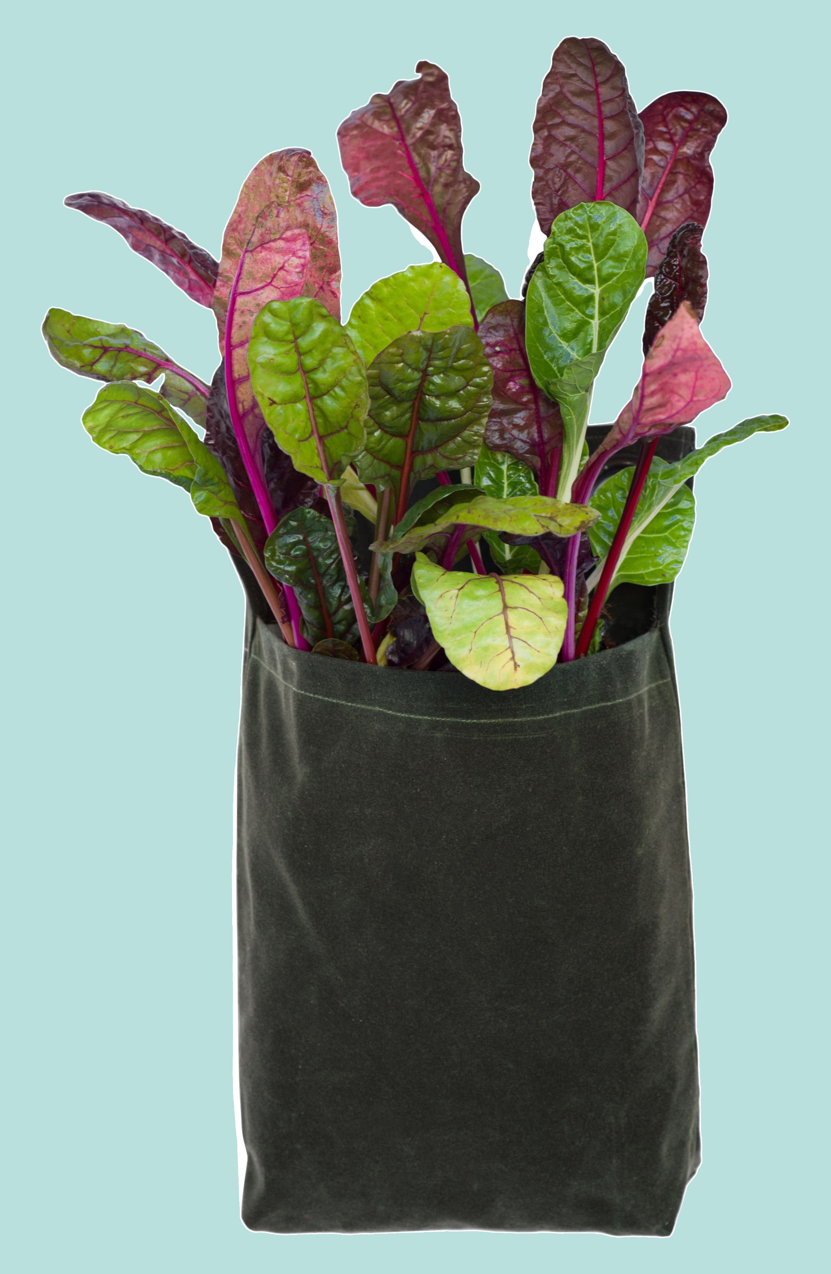 Small Waxed Canvas GrowPack Planter,                         Main,                         color, 300
