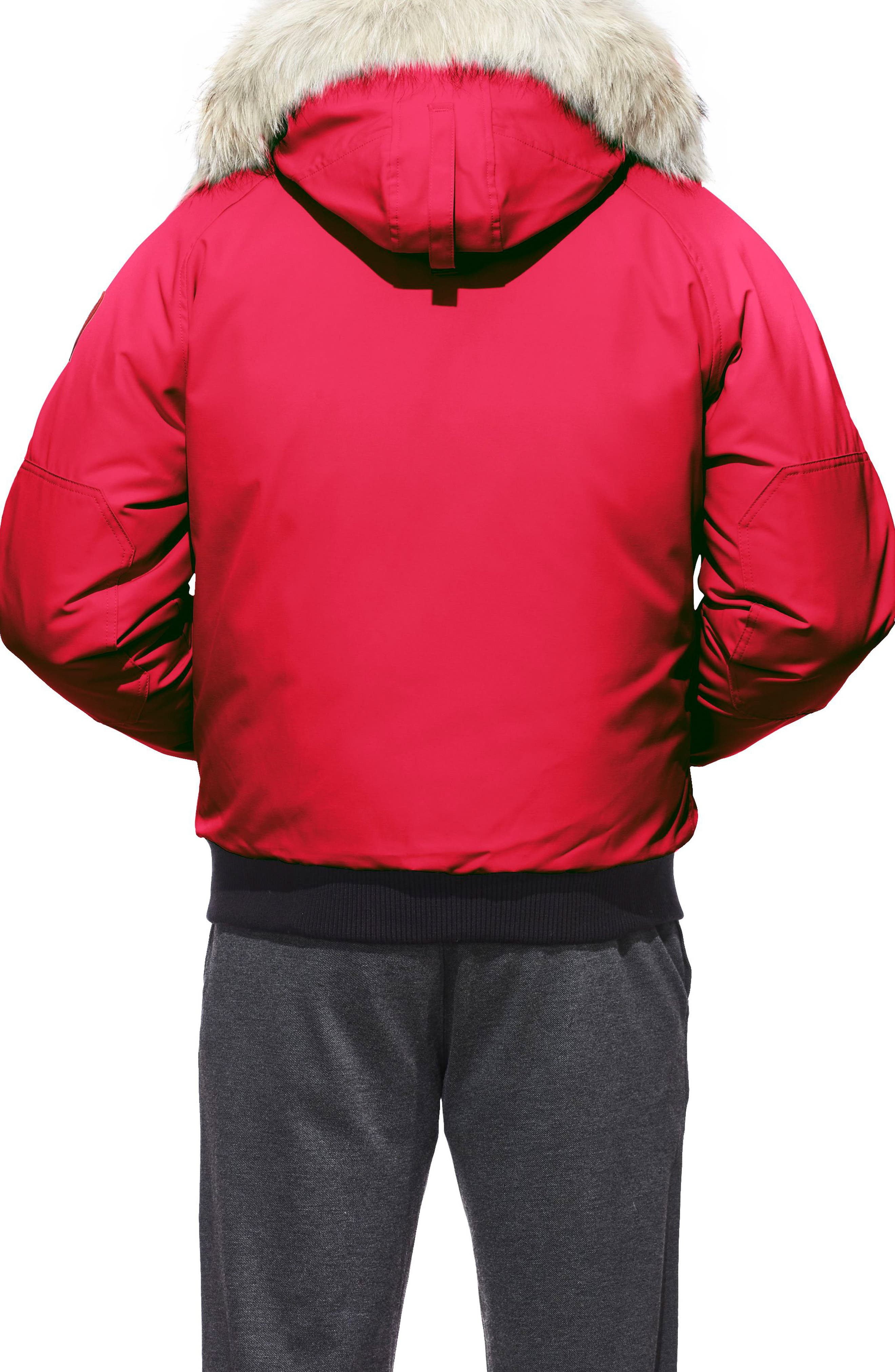 PBI Chilliwack Regular Fit Down Bomber Jacket with Genuine Coyote Trim,                             Alternate thumbnail 2, color,                             RED