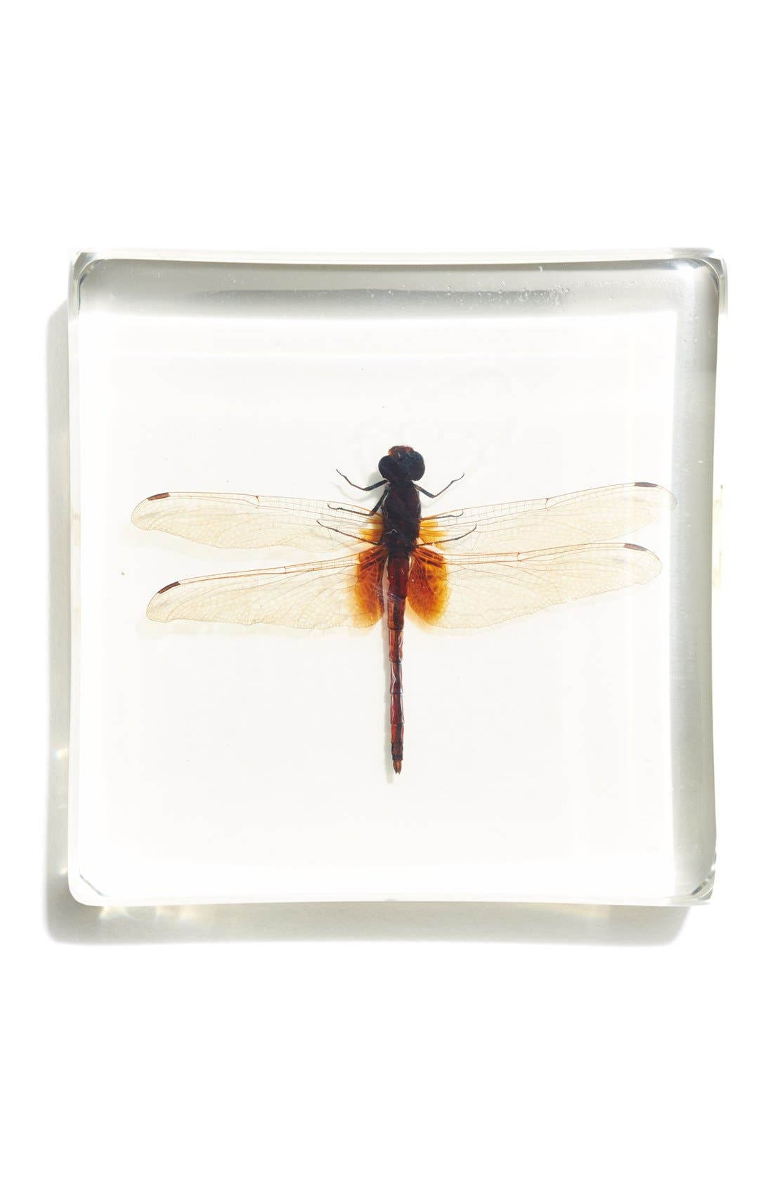 Ditch Jewel Dragonfly in Resin,                             Main thumbnail 1, color,                             960