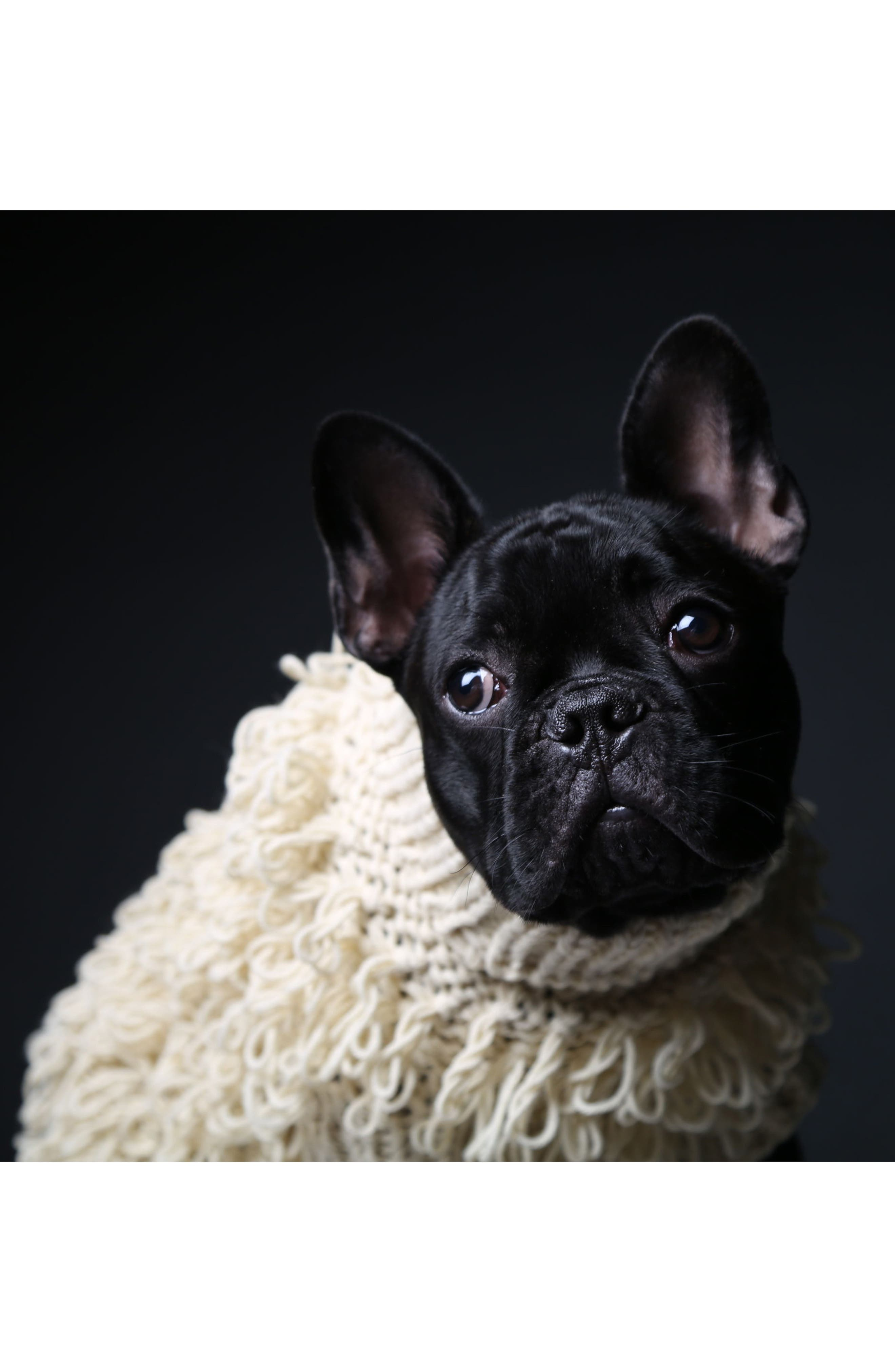 Curly Knit Dog Sweater,                             Alternate thumbnail 4, color,                             200