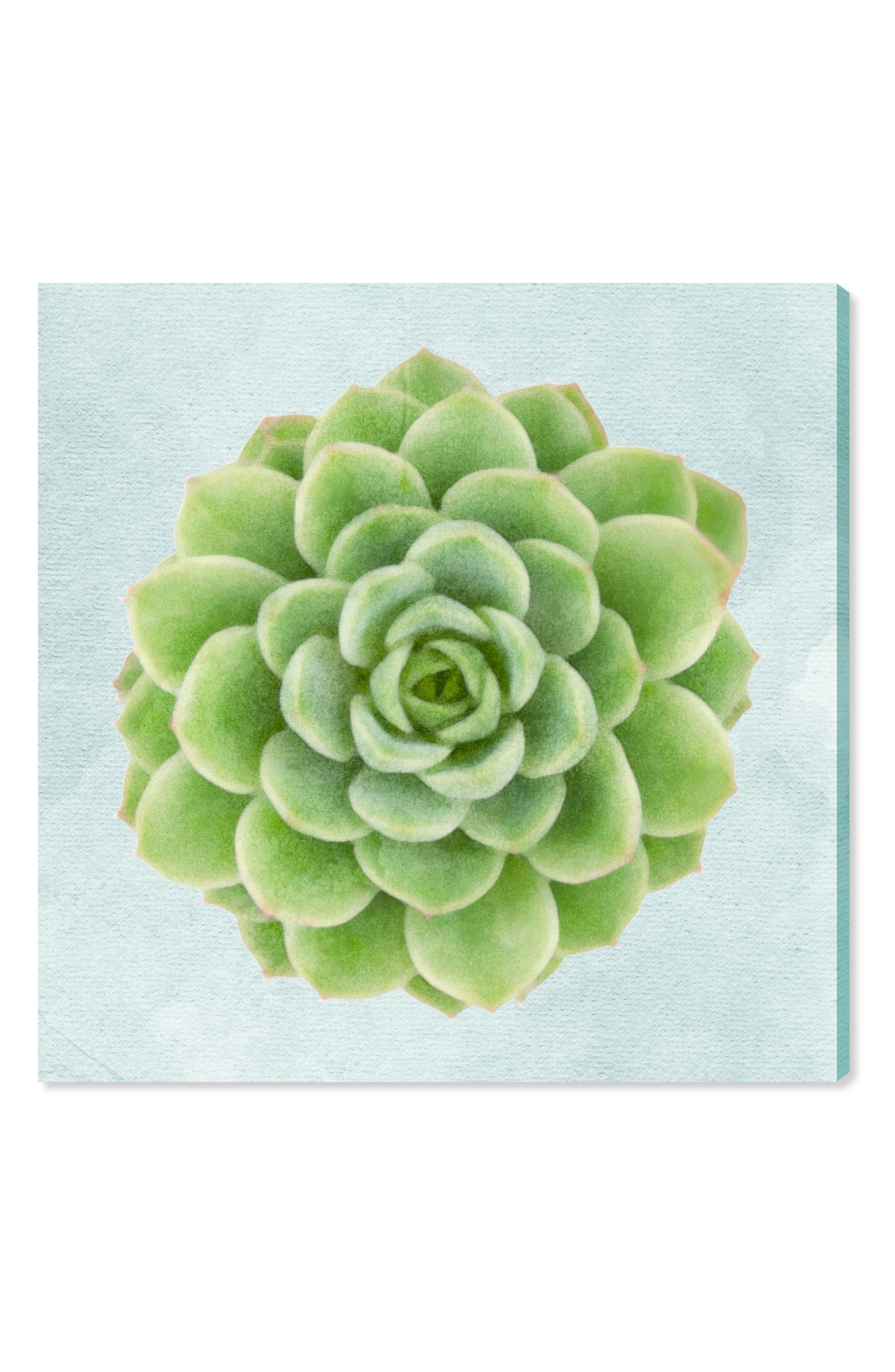 Succulent Dream I Canvas Wall Art,                             Main thumbnail 1, color,                             GREEN