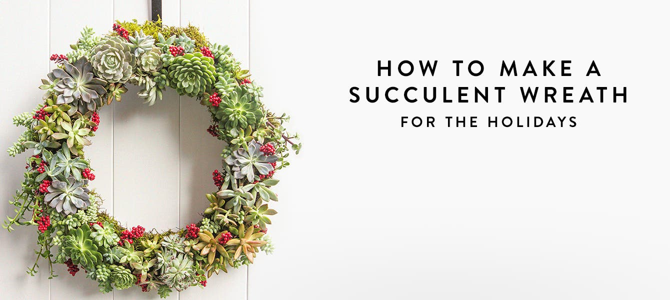 Succulent holiday wreath hanging on a door.