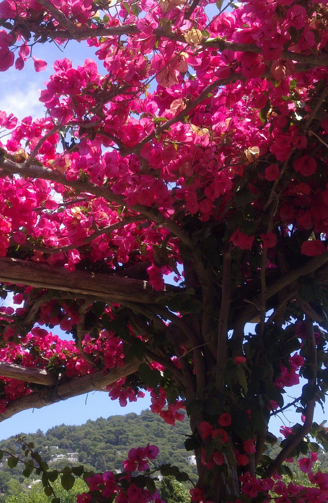MAISON MARGIELA, Replica Promenade in the Gardens Fragrance, Alternate thumbnail 7, color, 000