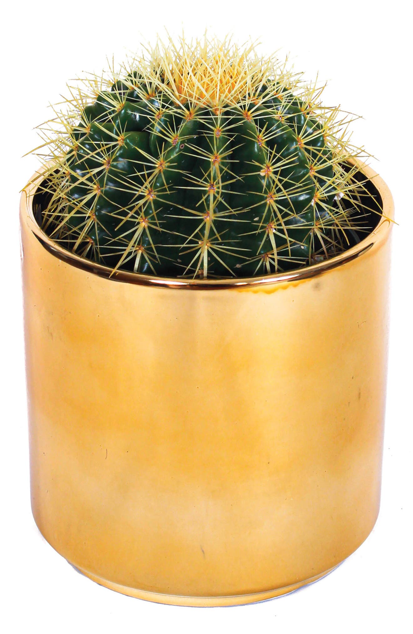 Get grounded with this living Golden Barrel cactus, from a company with a mission to help us appreciate the synergy between plants and humans. Complete with its own pot, this sun-loving cactus requires low-to-moderate maintenance and infrequent watering. Style Name: Grounded Golden Barrel Cactus & Planter. Style Number: 6166826. Available in stores.