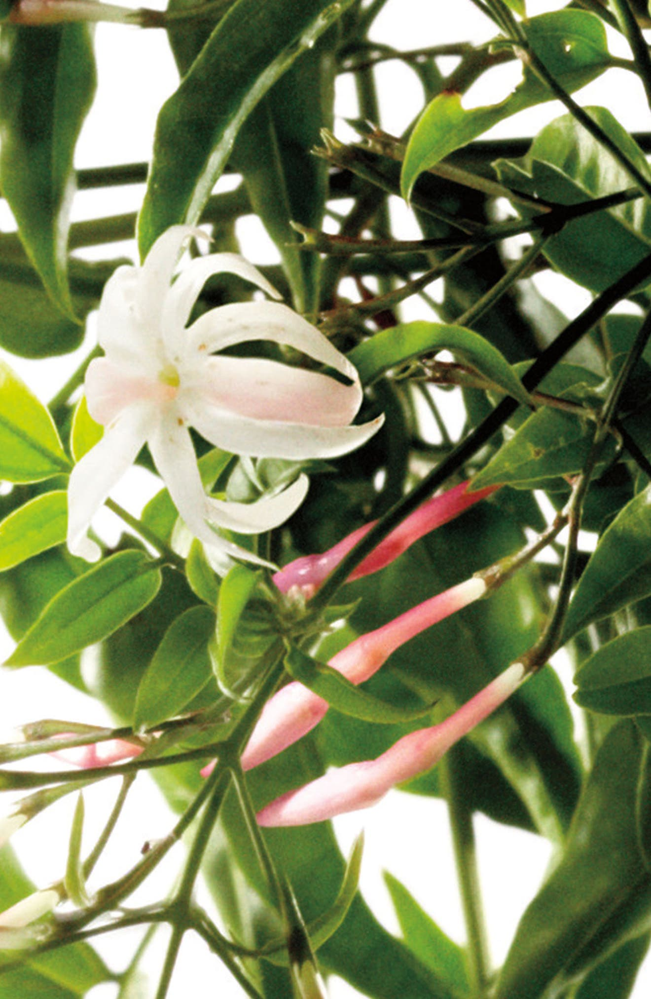 ,                             White Jasmine & Mint Cologne,                             Alternate thumbnail 4, color,                             000