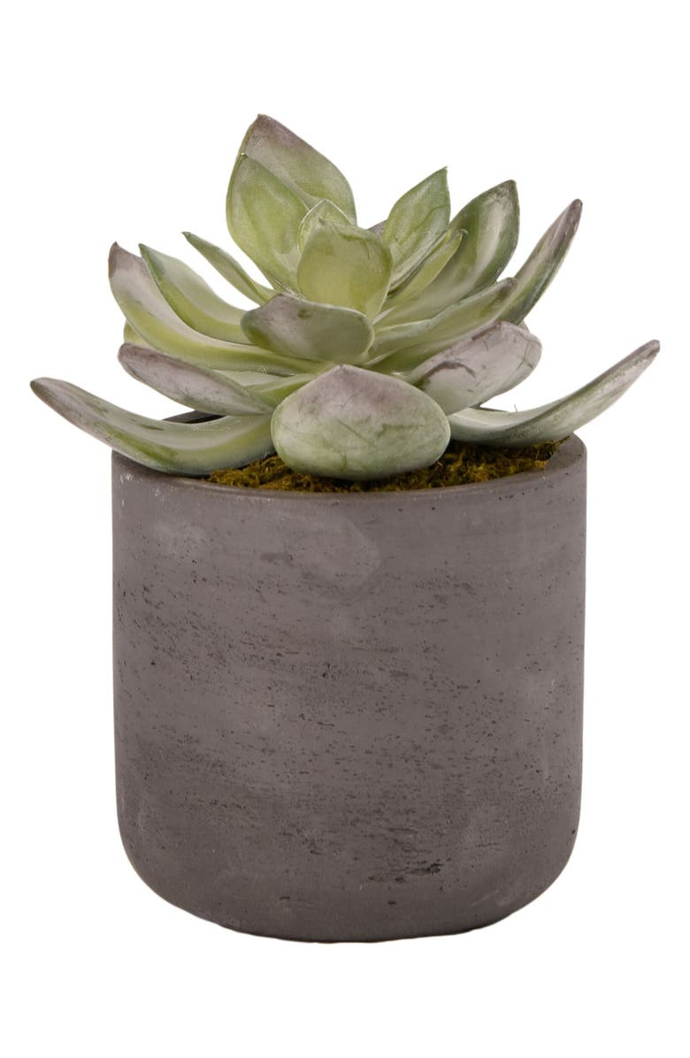 BLOOMR Desert Dudleya Planter Decoration, Main, color, GREEN
