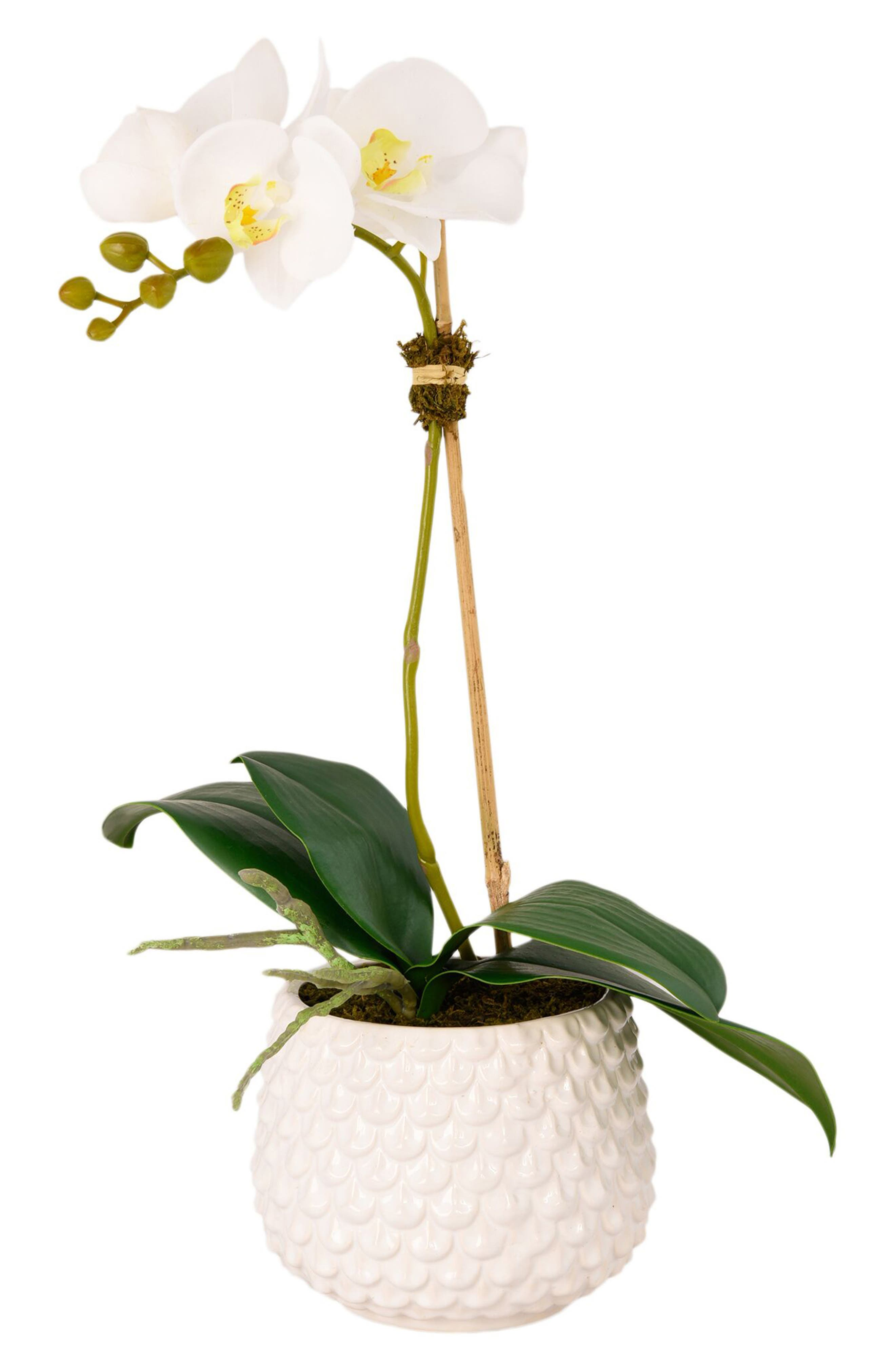No need for a green thumb when you\\\'ve got this charming faux-orchid planter designed by real florists to add a touch of wintry elegance to any decor. Style Name: Bloomr Pearl Orchid Planter Decoration. Style Number: 5820997. Available in stores.