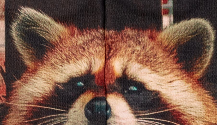 RACCOON PEEKING