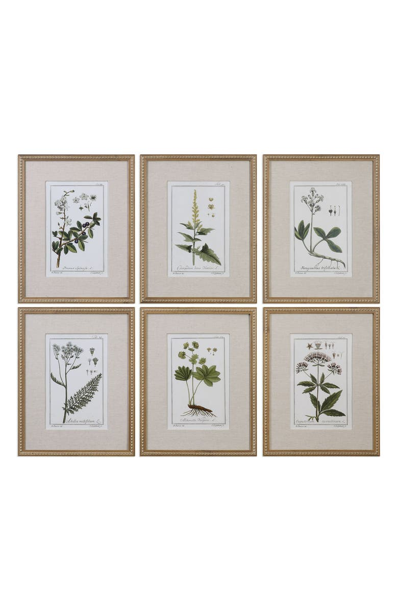 UTTERMOST Floral Botanical Set of 6 Art Prints, Main, color, BROWN