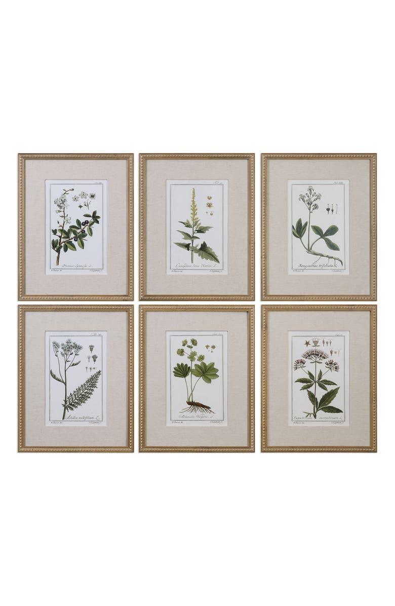 Floral Botanical Set Of 6 Art Prints by Uttermost