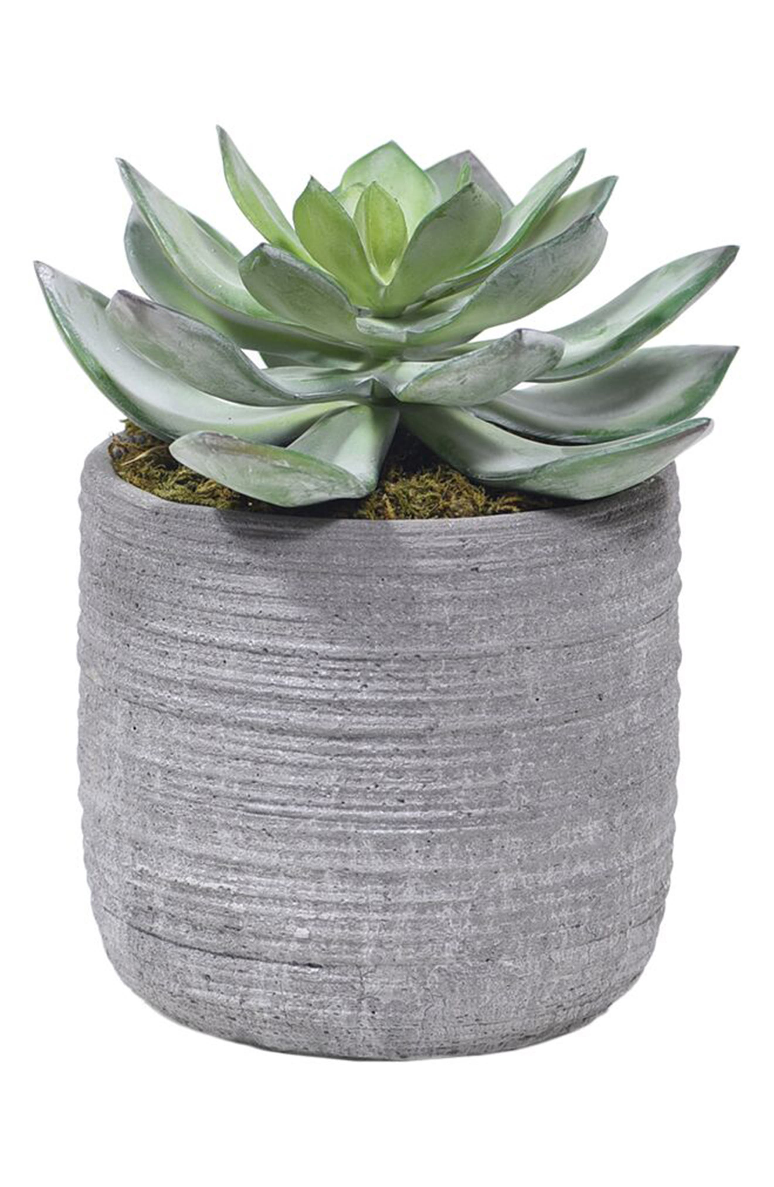 No need for a green thumb when you\\\'ve got this charming faux-dudleya planter to add a touch of desert cheer to your space and ace the succulent trend. Style Name: Bloomr Dudleya Succulent Planter Decoration. Style Number: 5820987. Available in stores.