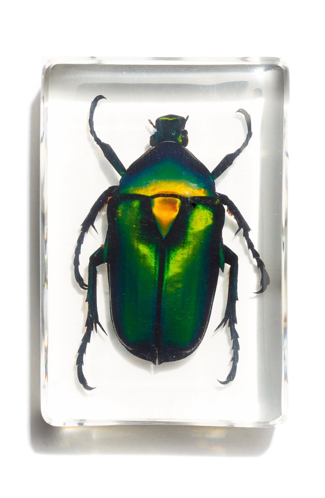 Chafer Beetle in Resin, Main, color, 960