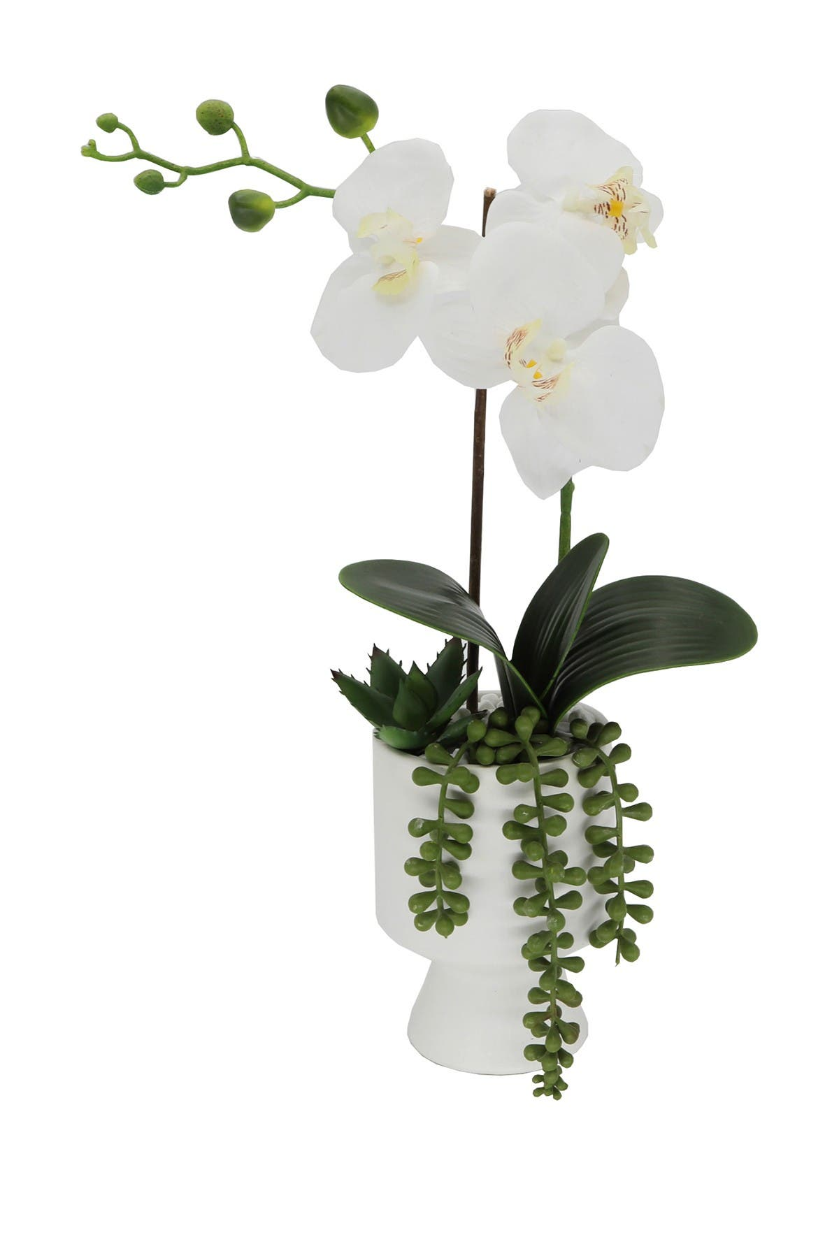 """Image of FLORA BUNDA 16"""" Real-Touch Orchid in Ceramic Pot"""