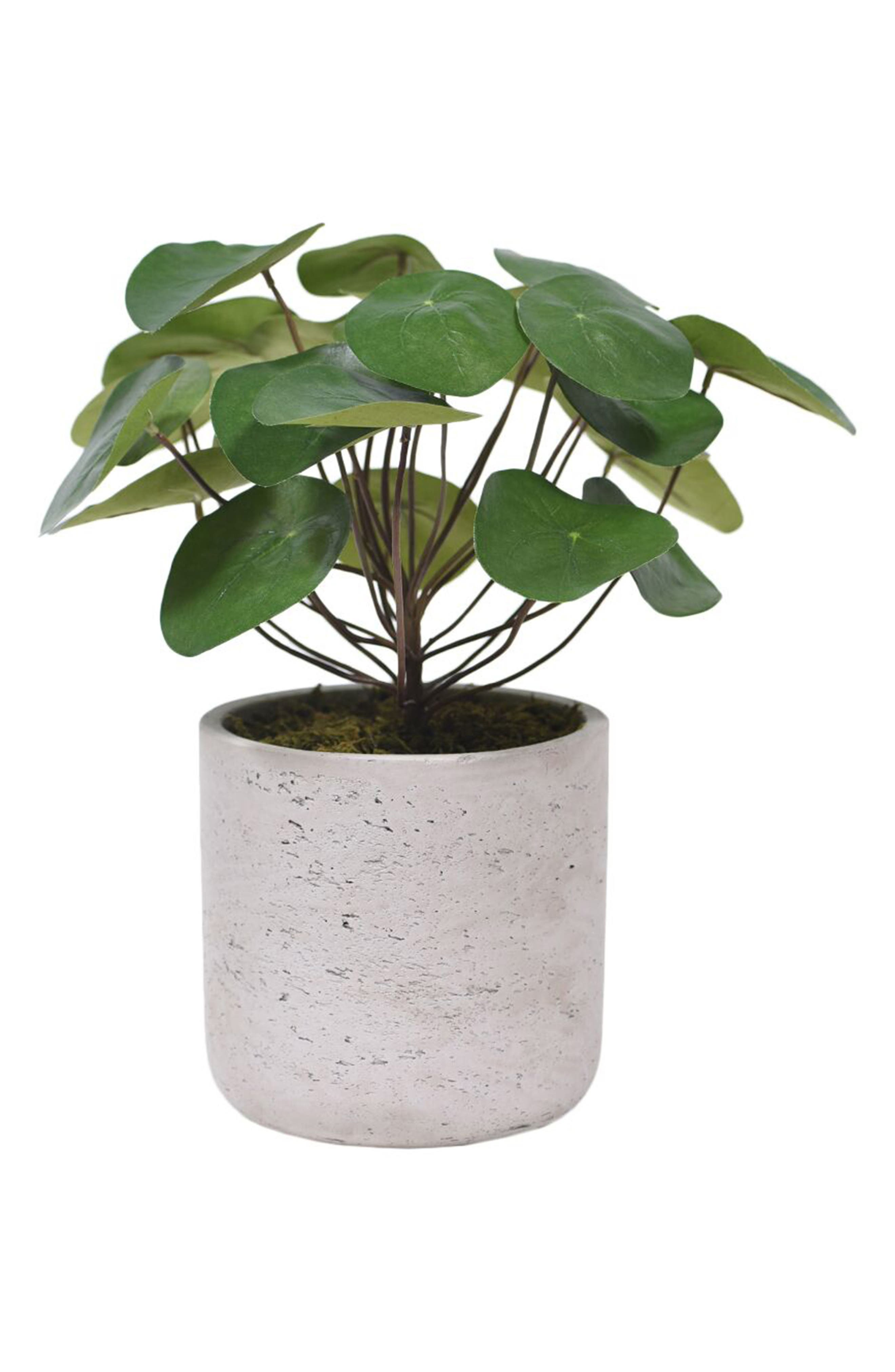 No need for a green thumb when you\\\'ve got this charming florist-designed faux pancake plant sitting cheerily in a textured concrete pot. The design serves as a perfect complement to any modern or industrial-chic decor. Style Name: Bloomr Pancake Plant Planter Decoration. Style Number: 5820994. Available in stores.
