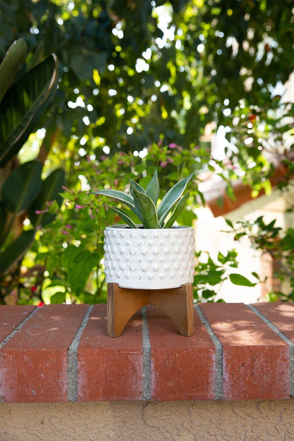"Image of FLORA BUNDA 6""  Hobnail Ceramic Planter on Wood Stand"