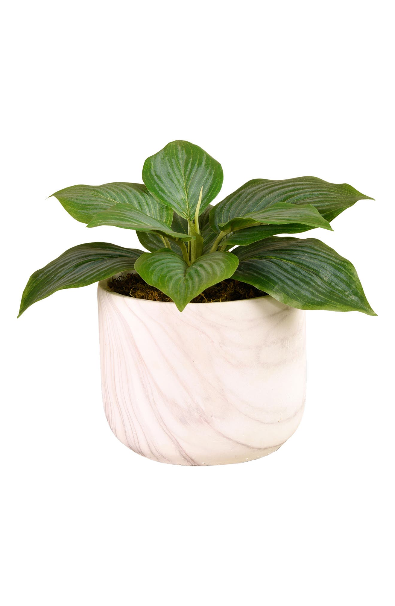 There\\\'s no need for a green thumb when you\\\'ve got this charming florist-designed faux hosta fanned out in a marbled concrete pot. The design serves as a perfect complement to any modern or classical decor. Style Name: Bloomr Potted Hosta Planter Decoration. Style Number: 6090733. Available in stores.