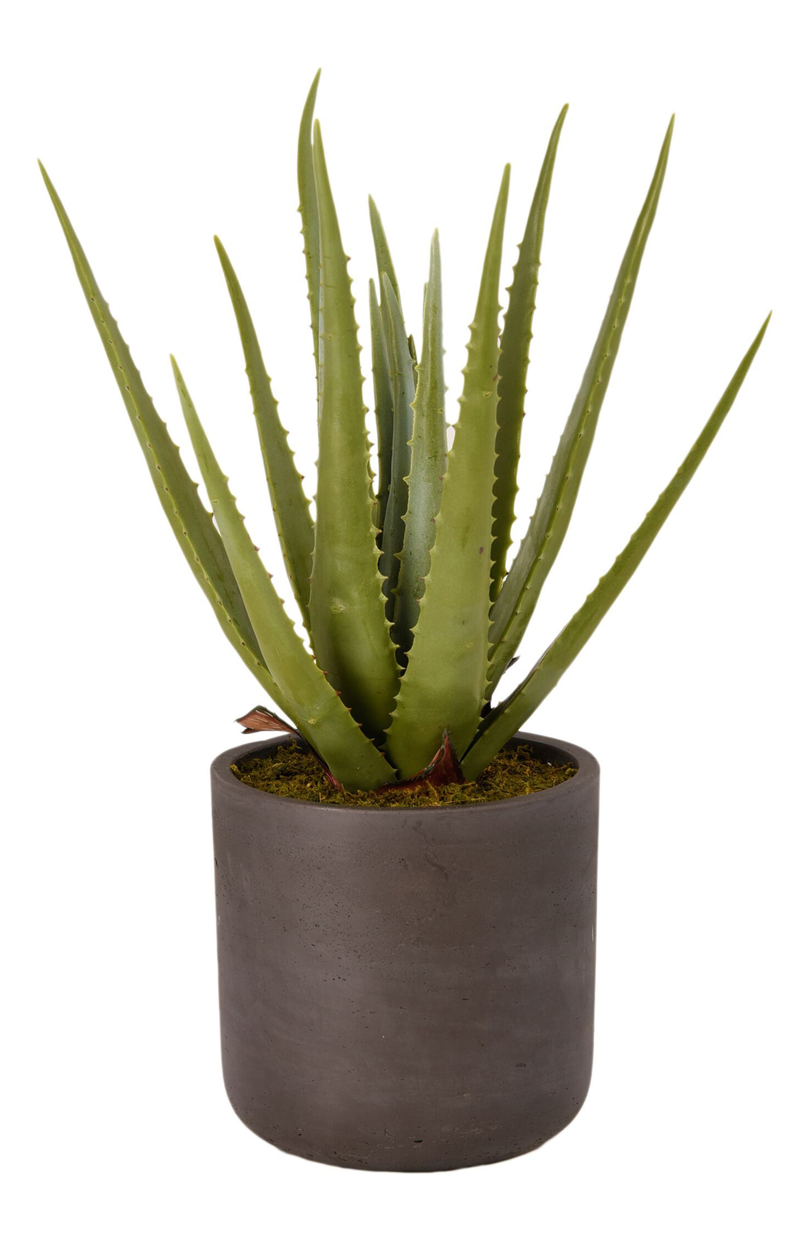 No need for a green thumb when you\\\'ve got this charming faux-aloe planter designed by real florists to add a touch of desert cheer to your minimalist decor. Style Name: Bloomr Desert Aloe Planter Decoration. Style Number: 5820995. Available in stores.