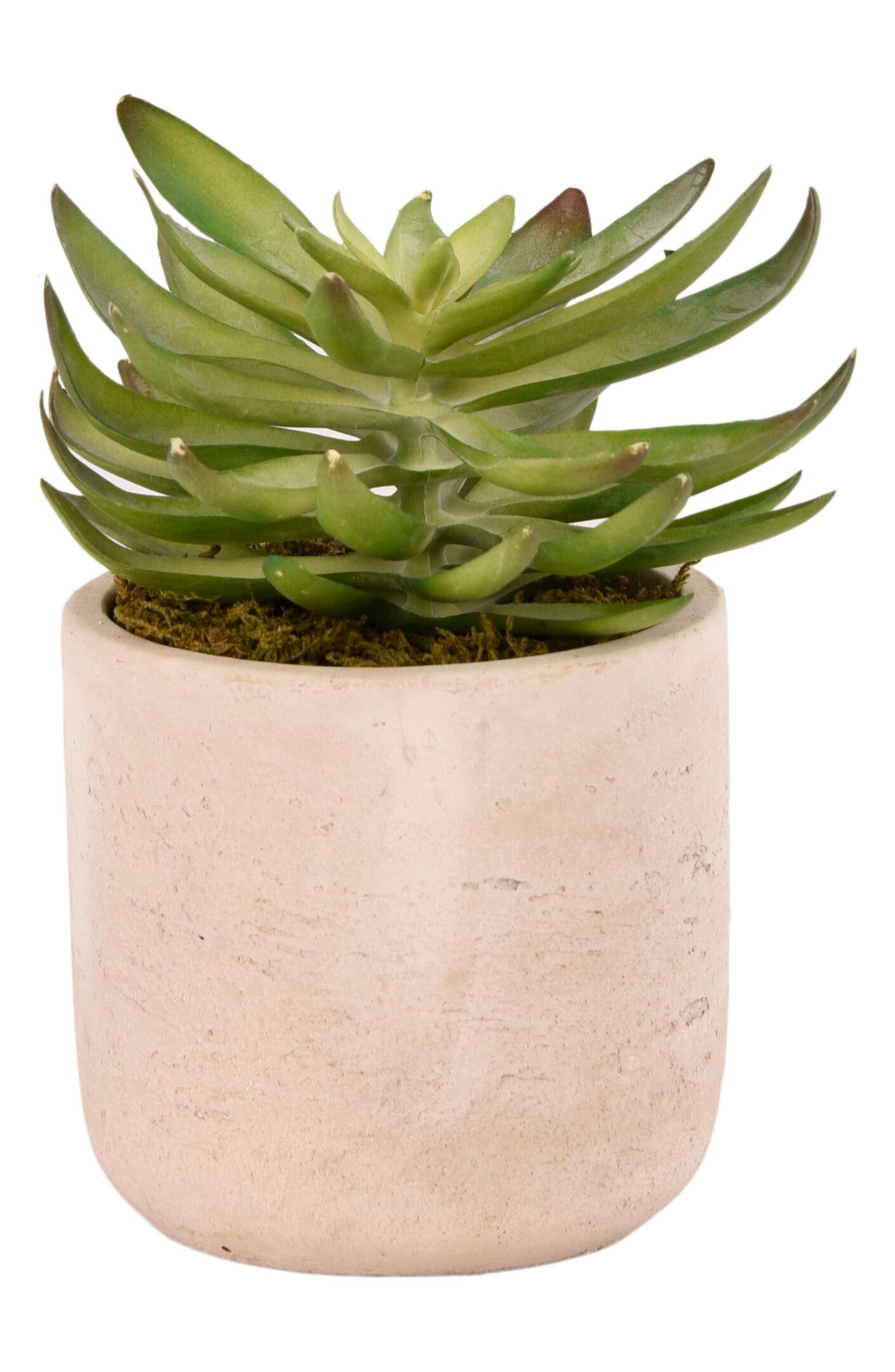 No need for a green thumb when you\\\'ve got this charming faux-echeveria planter to add a touch of desert cheer to any minimalist space. Style Name: Bloomr Desert Echeveria Succulent Planter Decoration. Style Number: 5820991. Available in stores.
