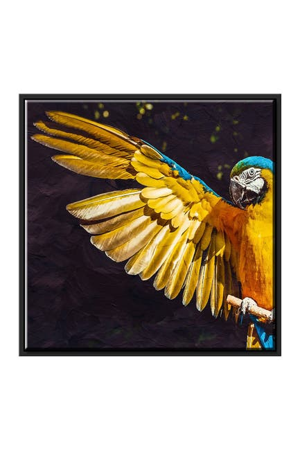 Image of PTM Images Parrot Canvas with Floater Frame