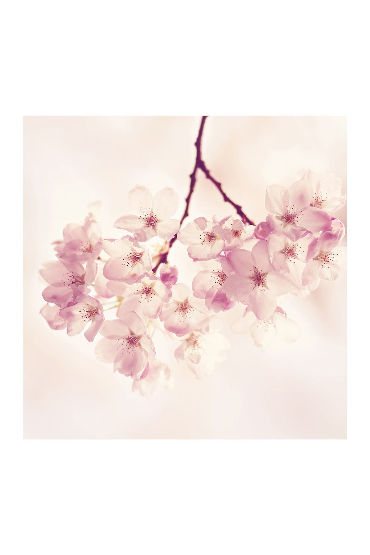 Marmont Hill Inc. Cherry Blossoms Painting Print on Wrapped Canvas - 48\\\
