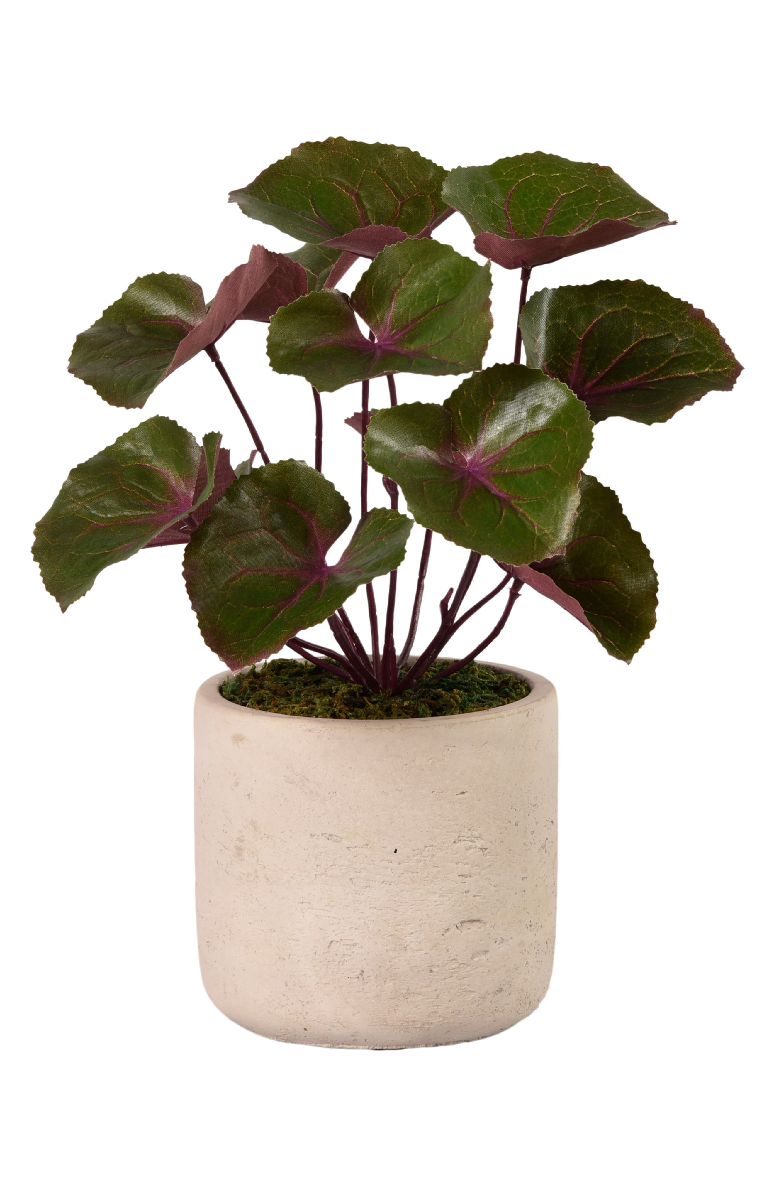 No need for a green thumb when you\\\'ve got this charming florist-designed faux ligularia plant sitting cheerily in a textured concrete pot. The design serves as a perfect complement to any modern or industrial-chic decor. Style Name: Bloomr Ligularia Planter Decoration. Style Number: 5889119. Available in stores.
