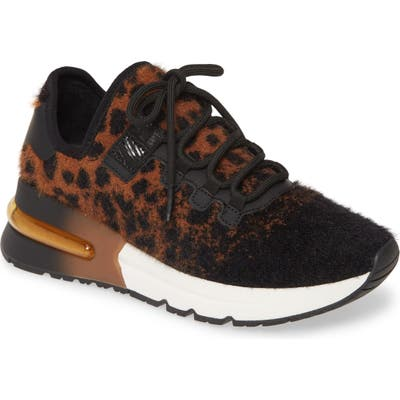 Ash Krush Knit Sneaker, Brown