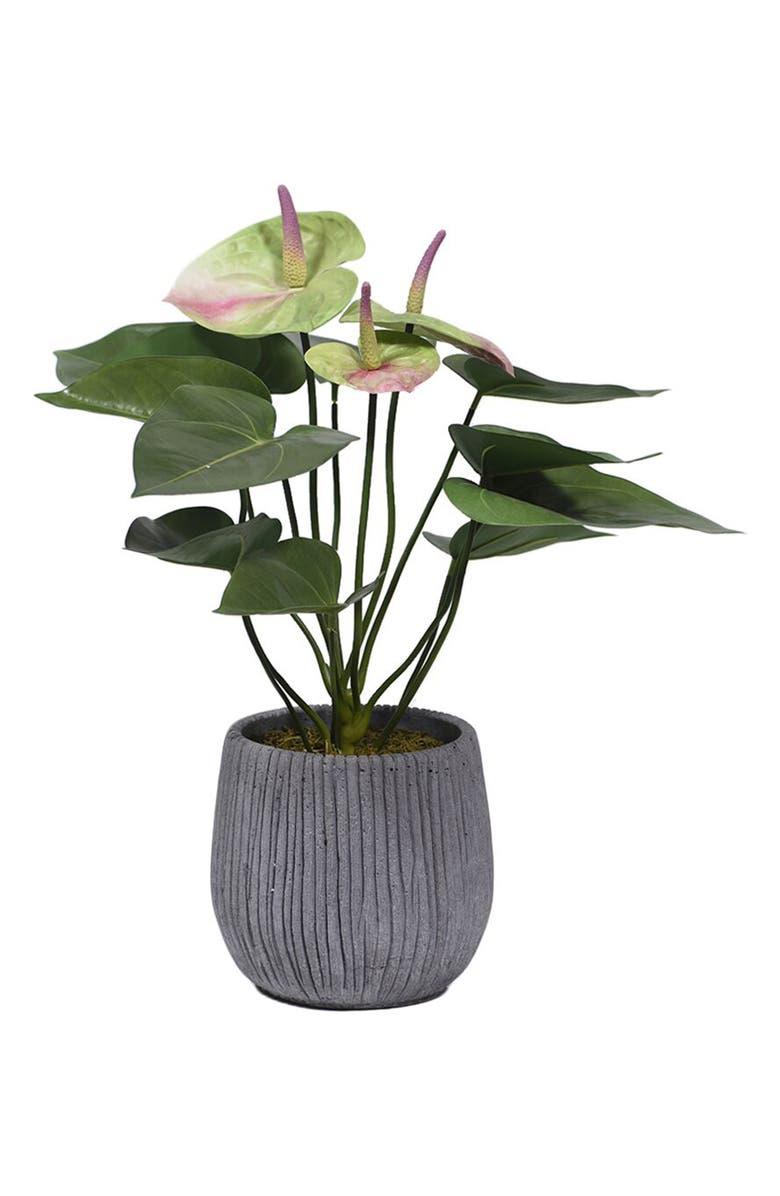 BLOOMR Anthurium Planter Decoration, Main, color, GREEN