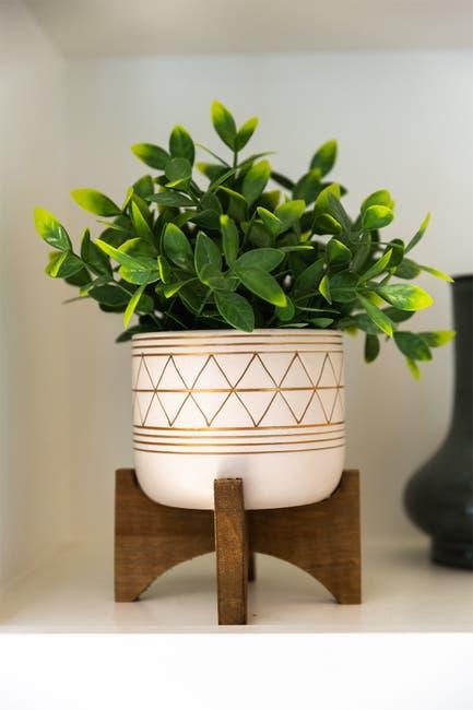 """Image of FLORA BUNDA 12"""" Tea Plant in 5"""" Geo Ceramic Footed Pot"""