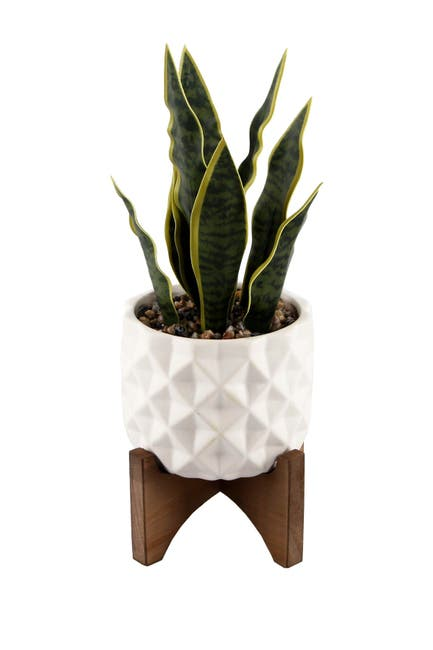 "Image of FLORA BUNDA 12.5"" Snake Plant in Ceramic Pot on Stand"