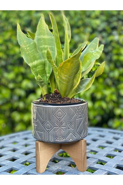 "Image of FLORA BUNDA 6"" Pinwheel Ceramic Planter on Wood Stand - Glass Charcoal"