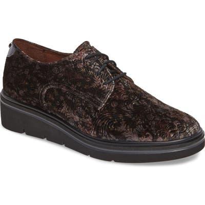 Hispanitas Richelle Oxford Sneaker - Grey