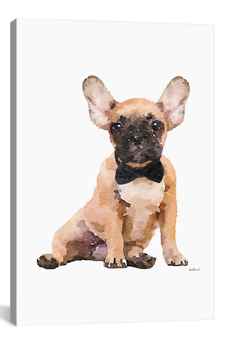 ICANVAS Fawn Frenchie by Amanda Greenwood Giclée Print Canvas Art, Main, color, BROWN