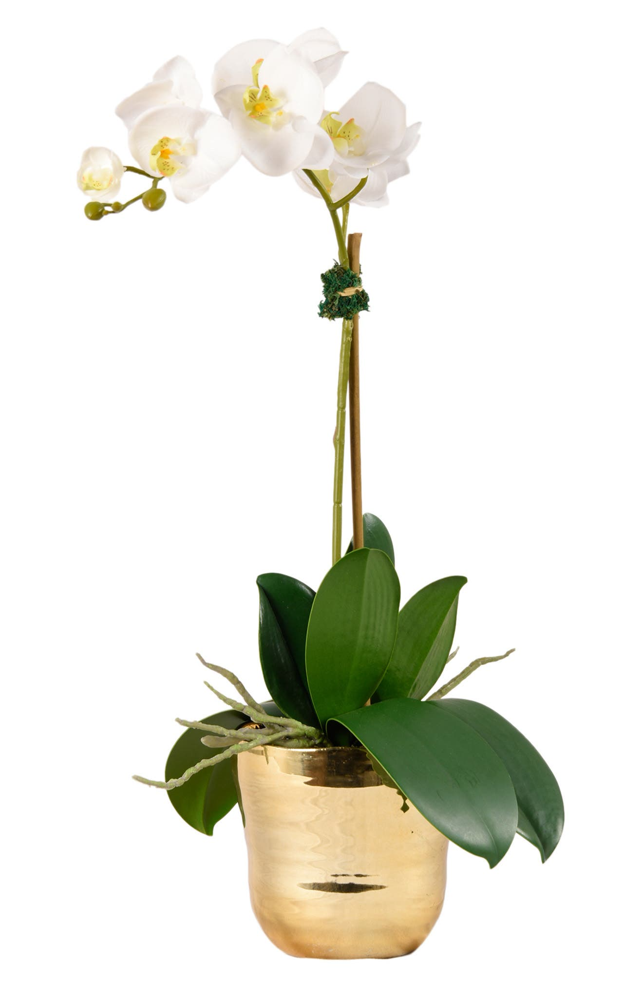 No need for a green thumb when you\\\'ve got this elegant florist-designed faux orchid arcing gracefully above a shining goldtone pot. The design serves as a perfect complement to any decor. Style Name: Bloomr Kingly Orchid Planter Decoration. Style Number: 5889111. Available in stores.