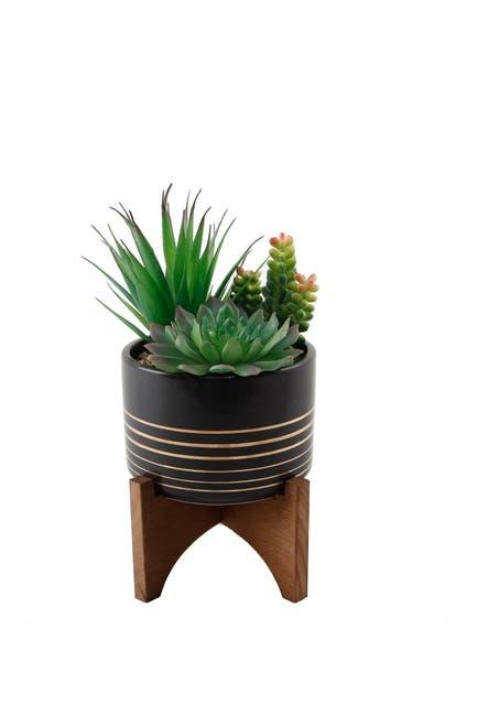 Image of FLORA BUNDA Black/Gold Lines Ceramic Stand Succulent Mix