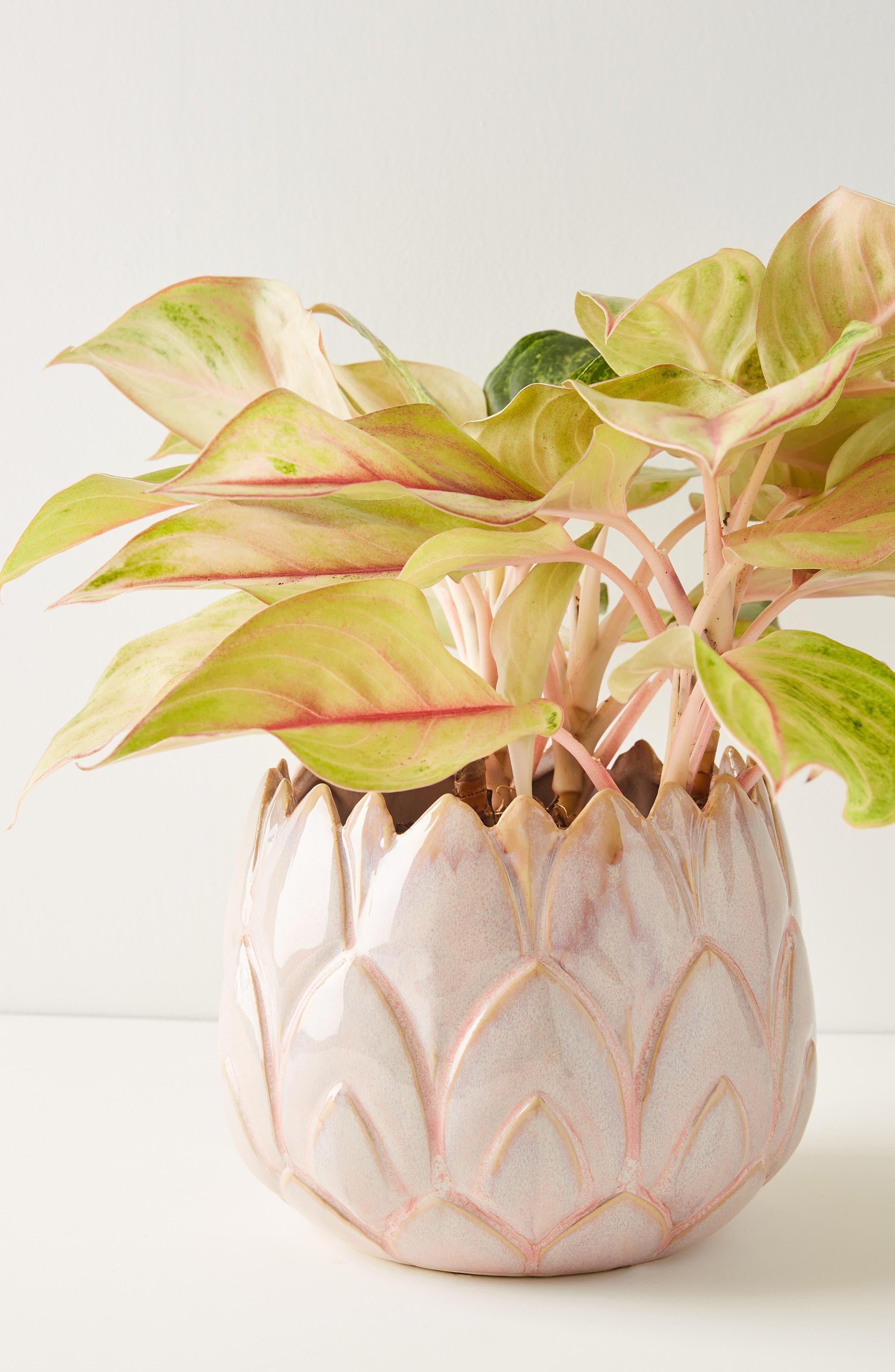 anthropologie lotus stoneware pot