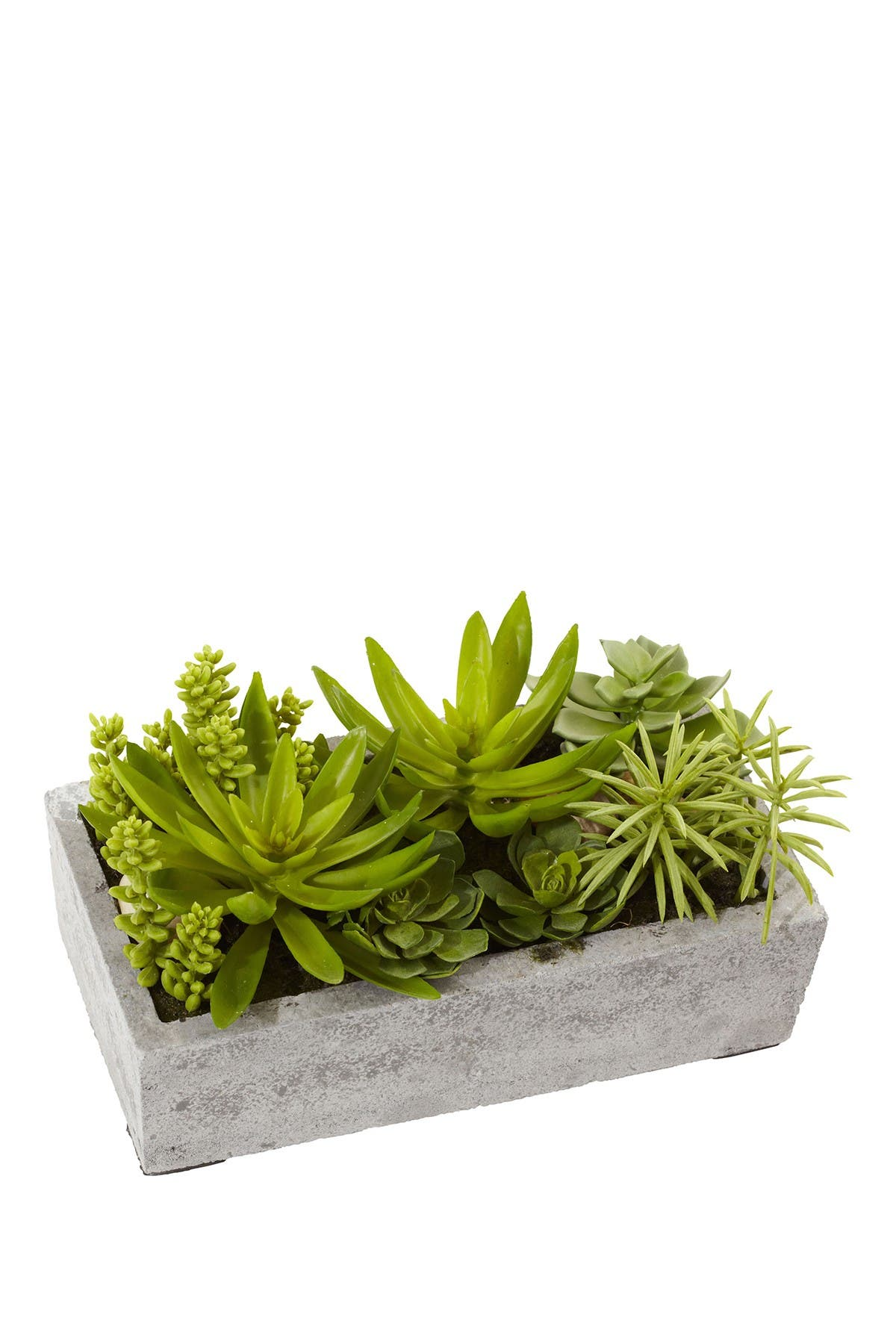 Image of NEARLY NATURAL Succulent Garden with Concrete Planter  - Green