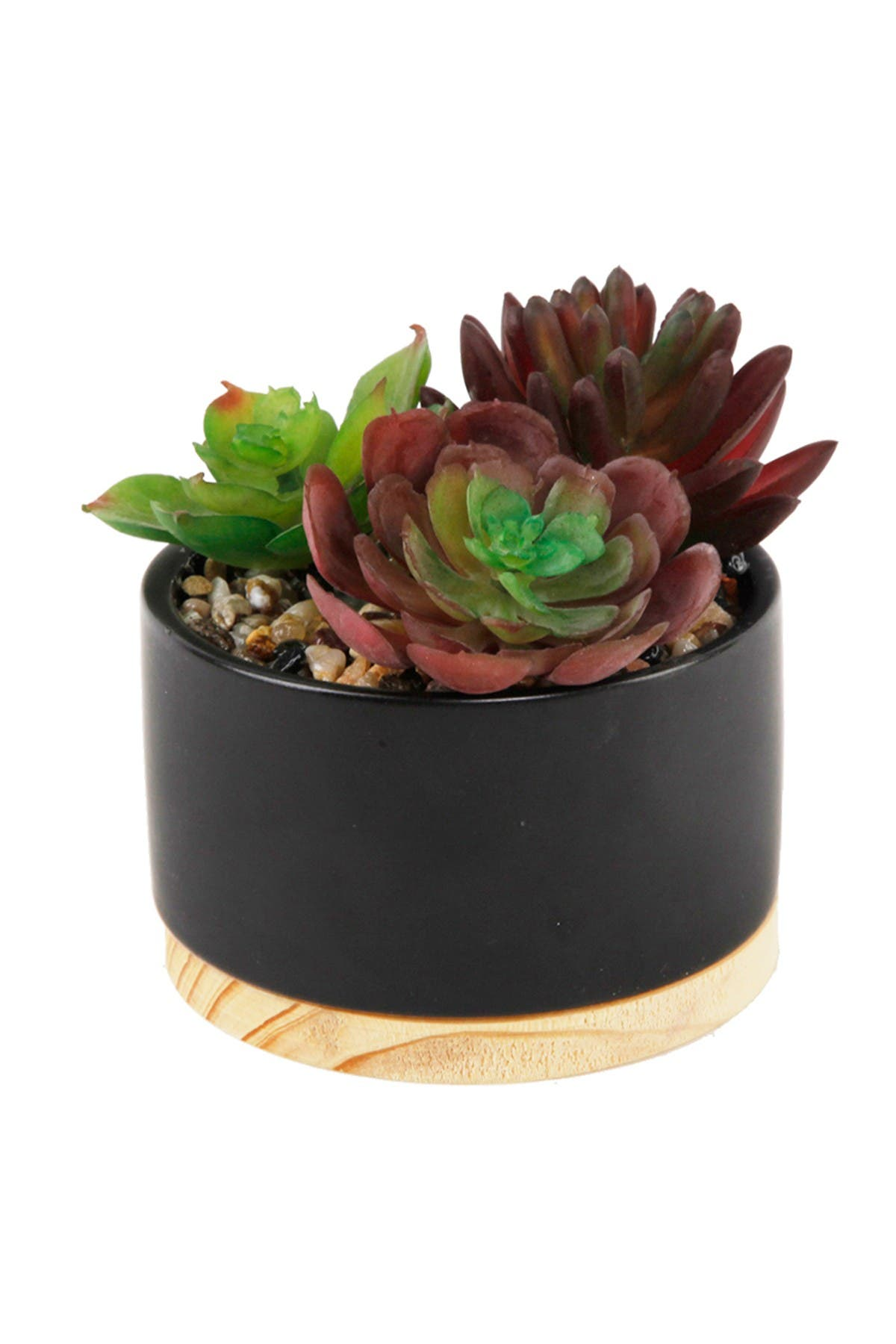 Image of FLORA BUNDA Black Succulent Mix Ceramic Pot with Wood Base