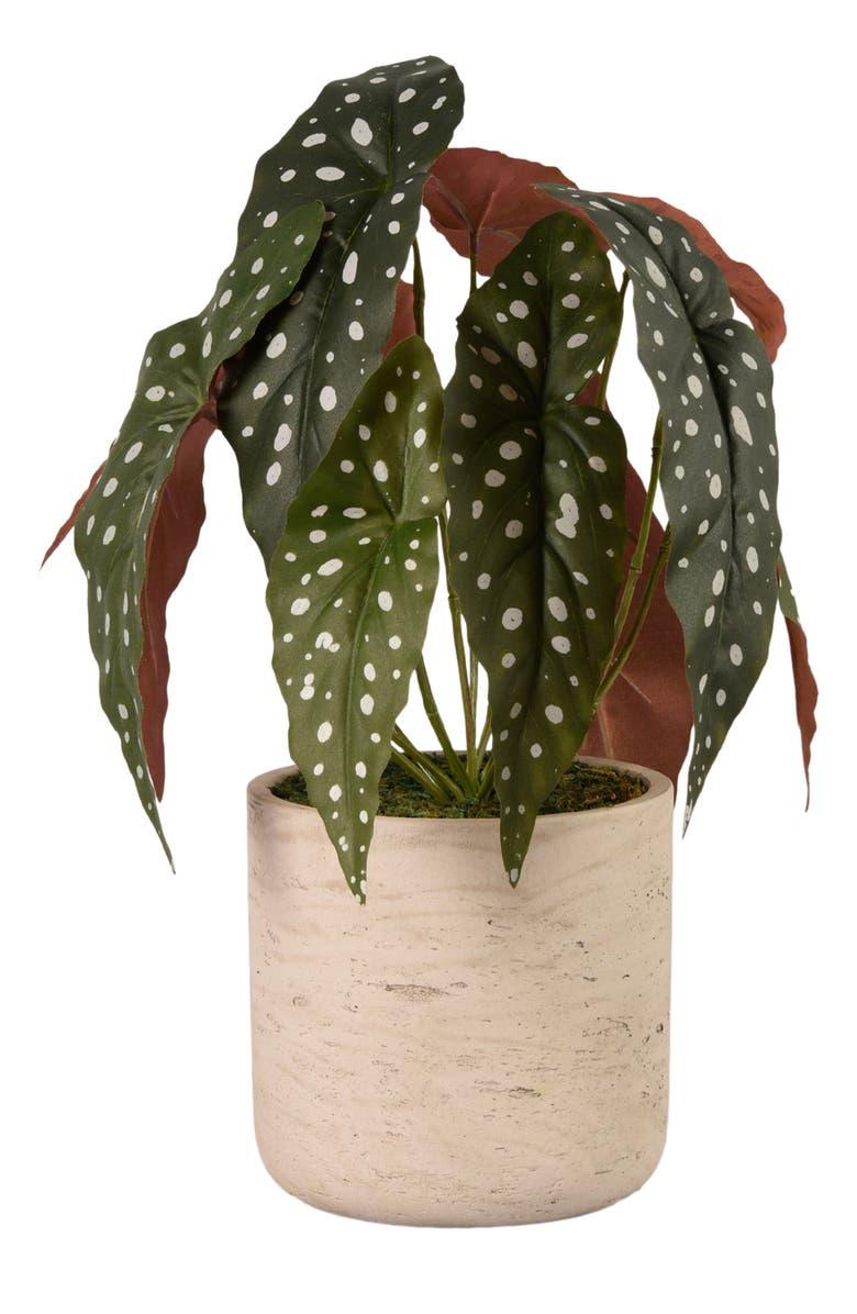 BLOOMR Begonia Planter Decoration, Main, color, IVORY
